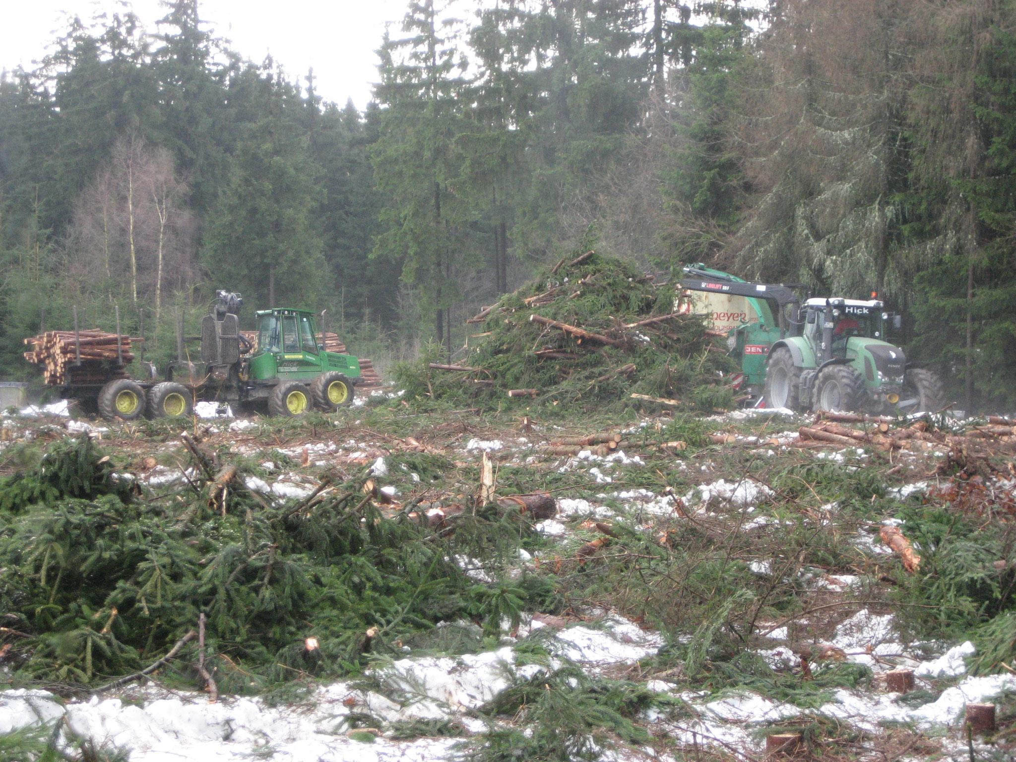 Holzernte auf gefrorenem Boden