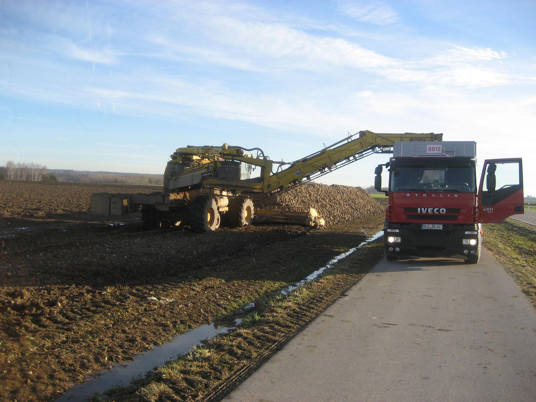 Zuckerrübenabfuhr im Januar