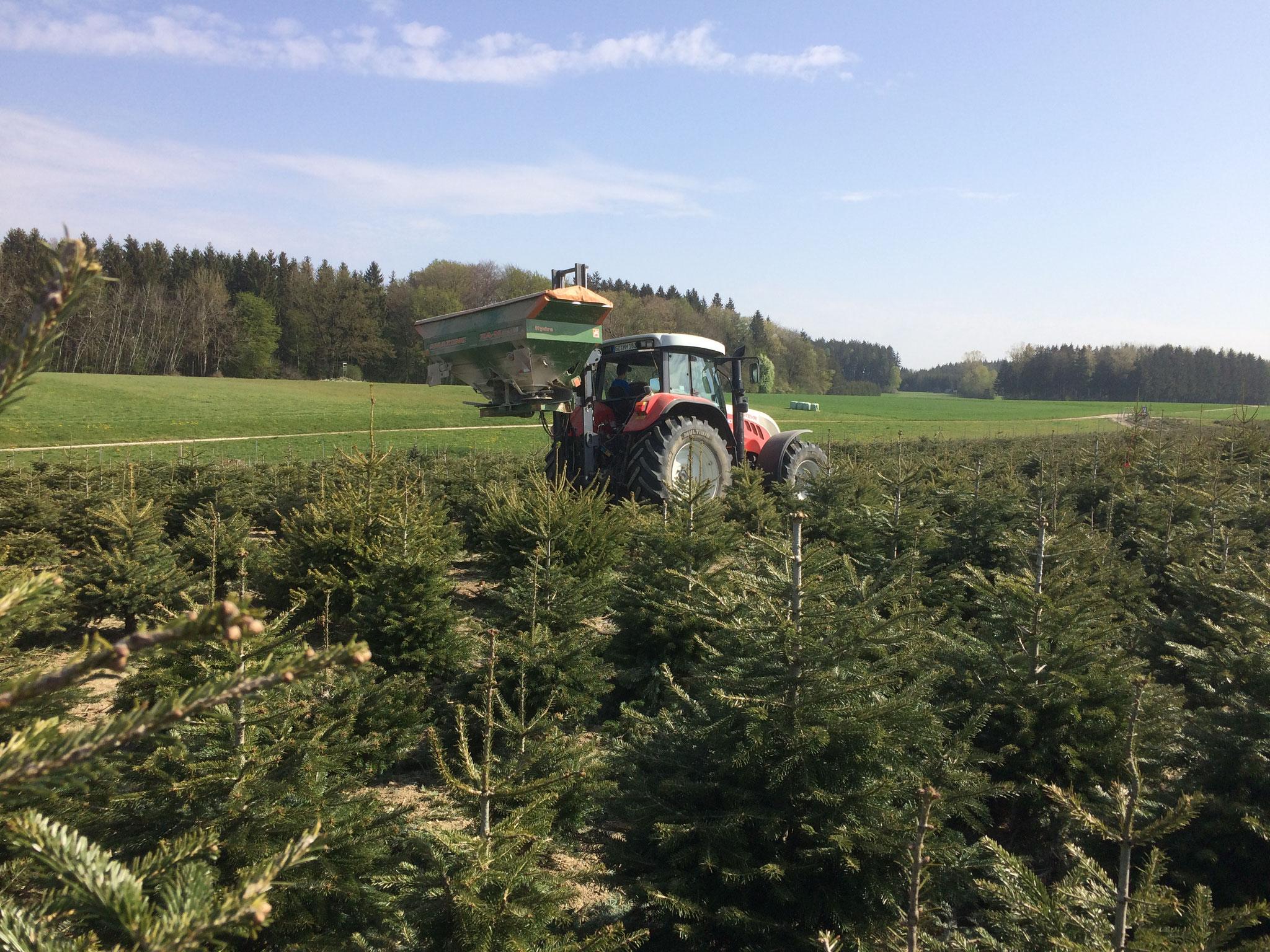 Düngung der Bäume nach Bedarfsuntersuchung