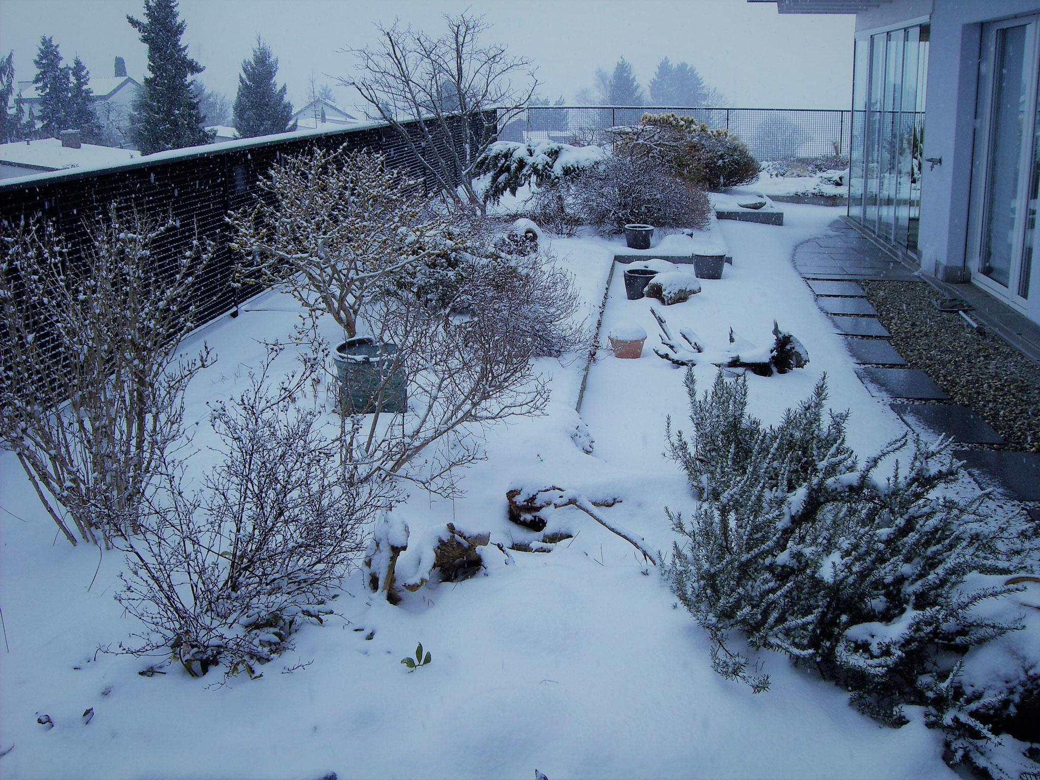 März / 1 / Dachgarten Süd-West