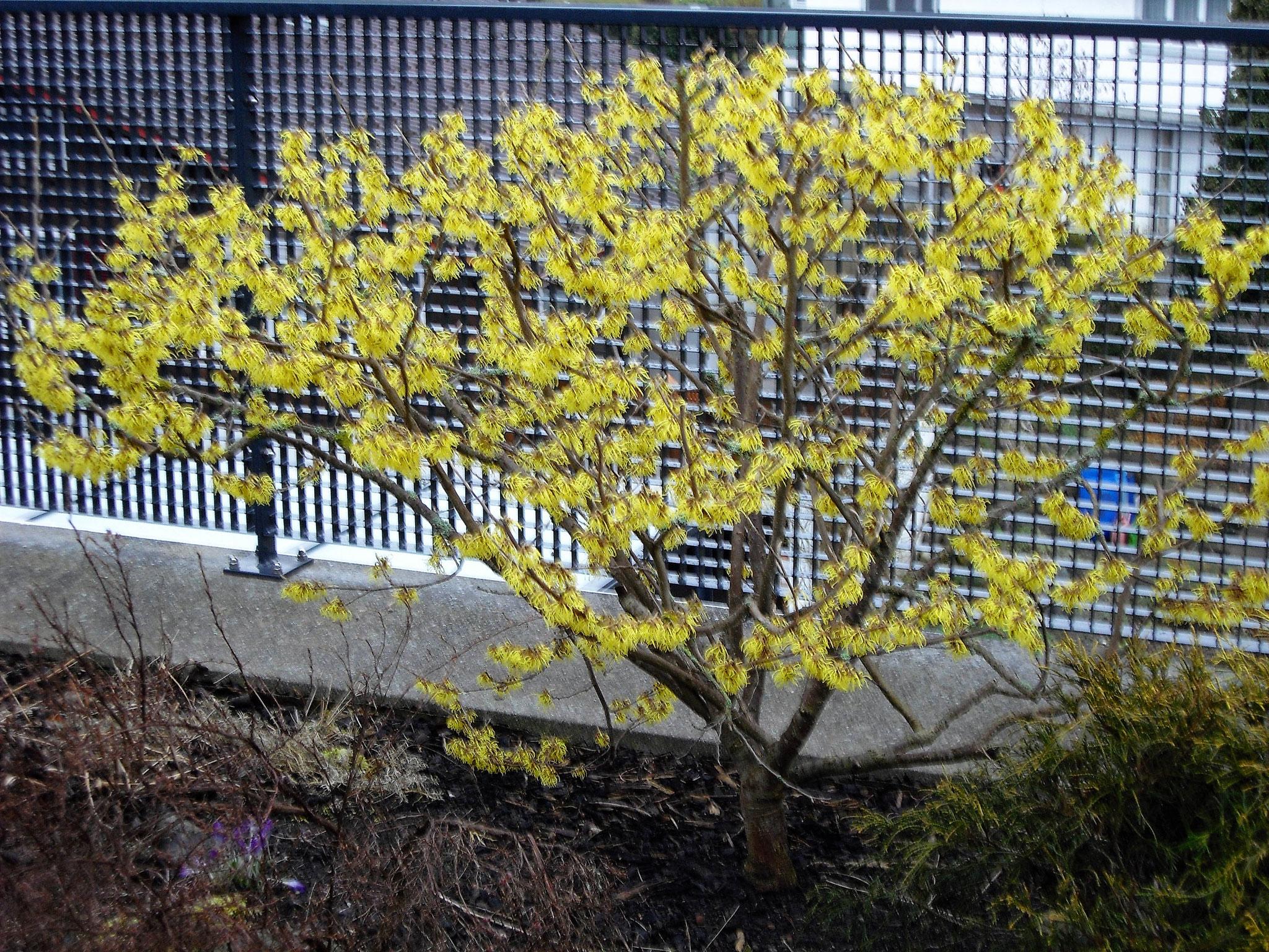 März / 3 / Dachgarten Süd-West