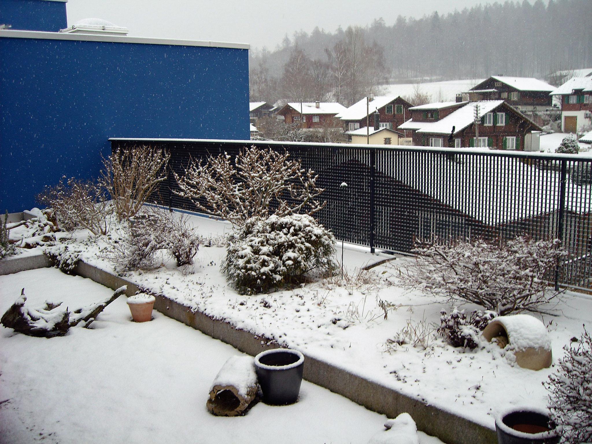 Februar / 5 / Dachgarten Süd-West