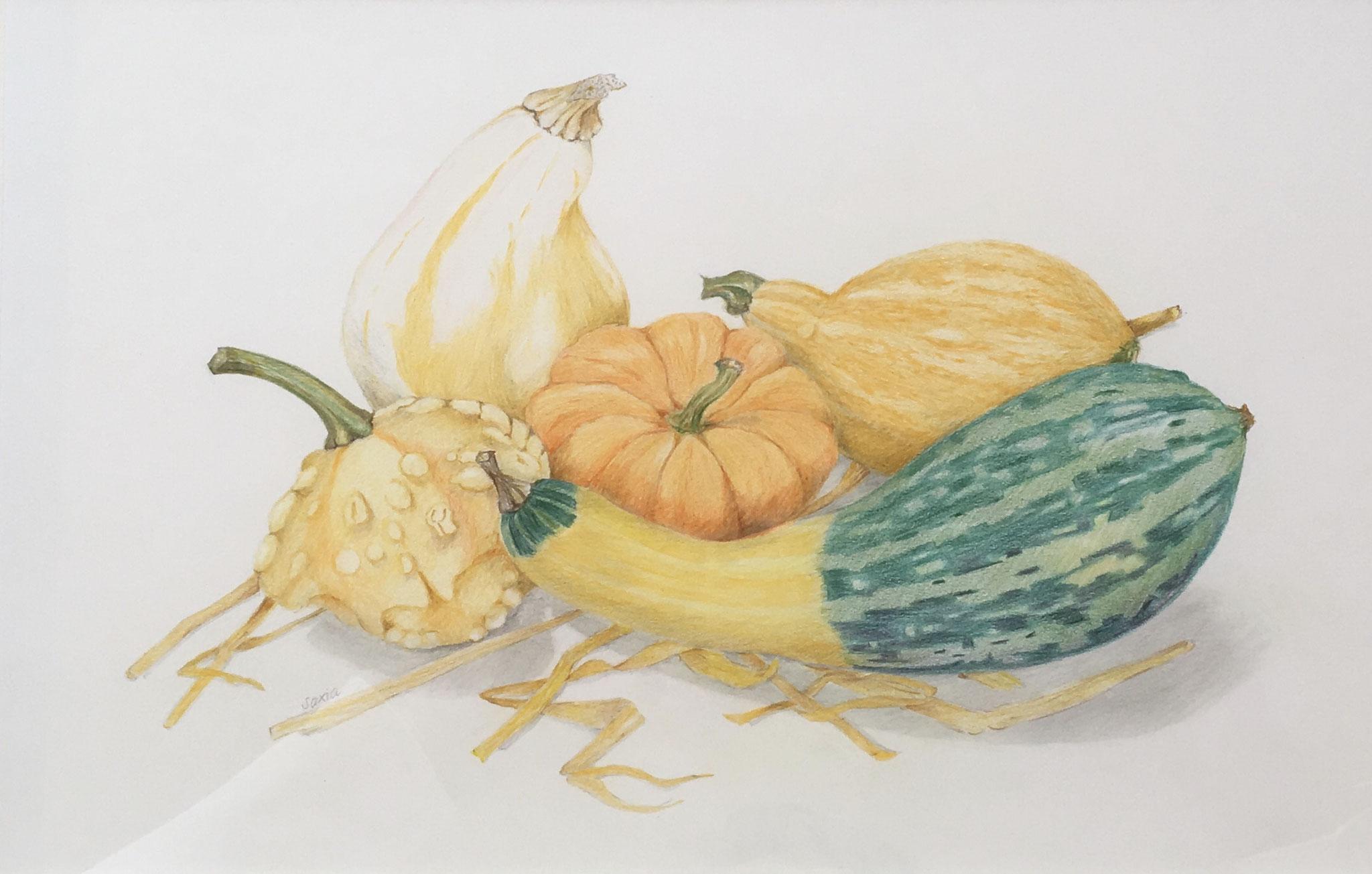 Zierkürbisse, Zeichnung Farbstift  30 x 40 cm