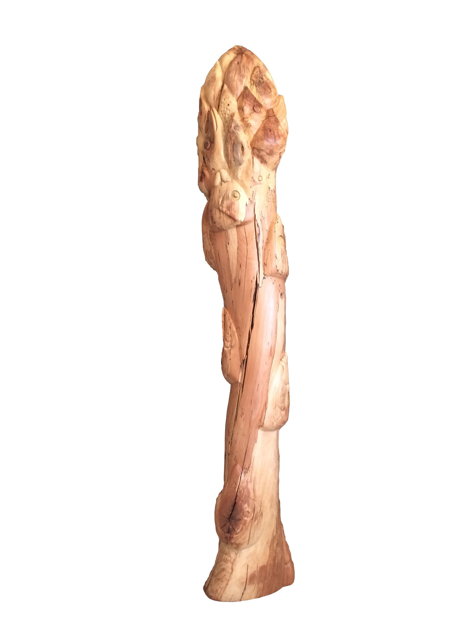 Asparagus sculpted with fishheads  (180x25x25)