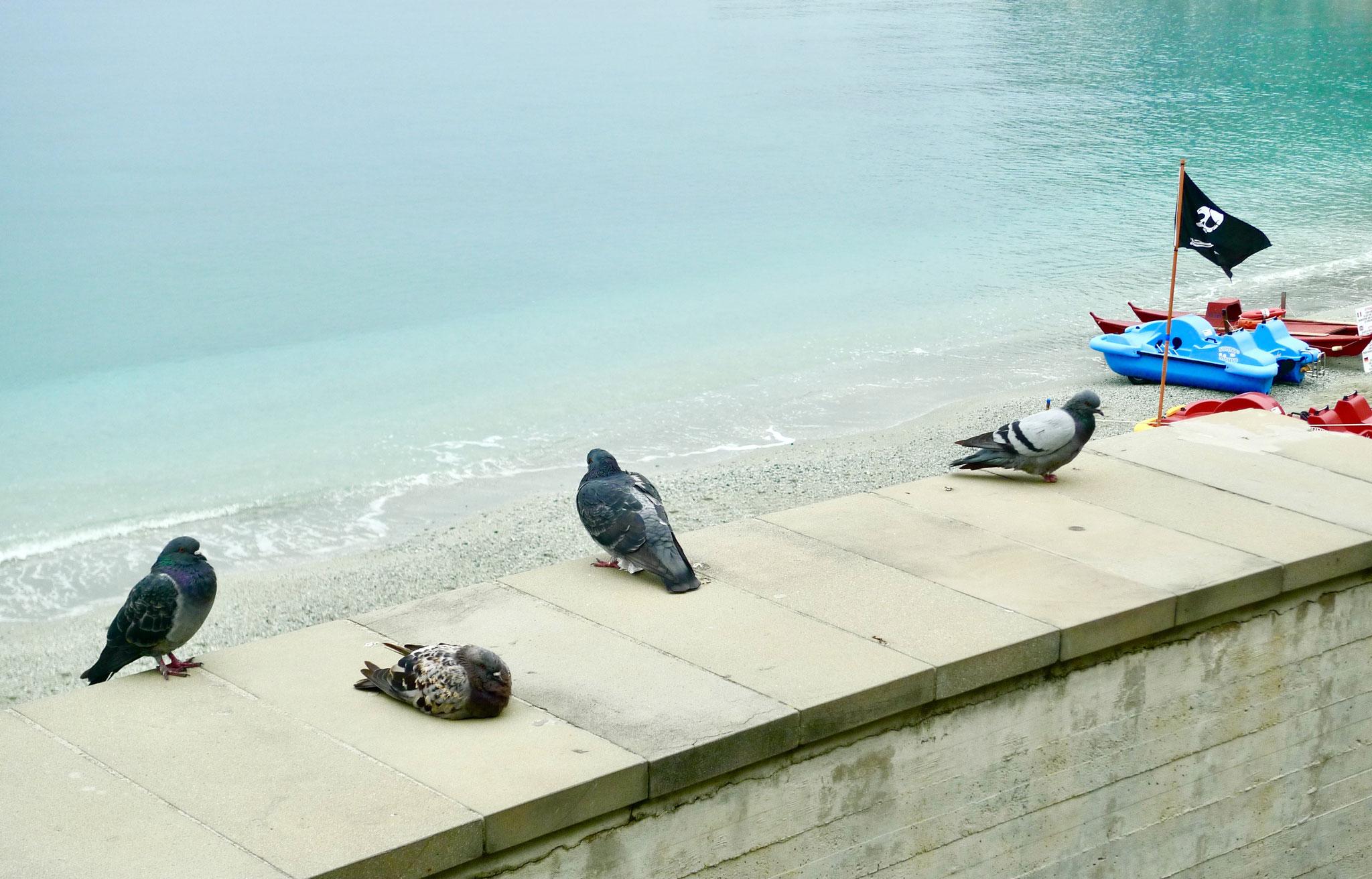 Pigeons, Monterosso al Mare