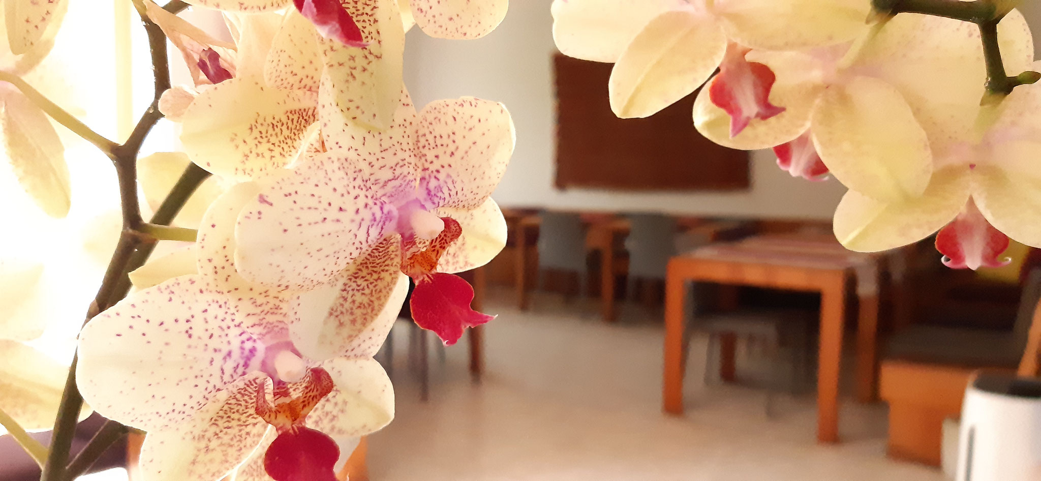 Orchids in the restaurant