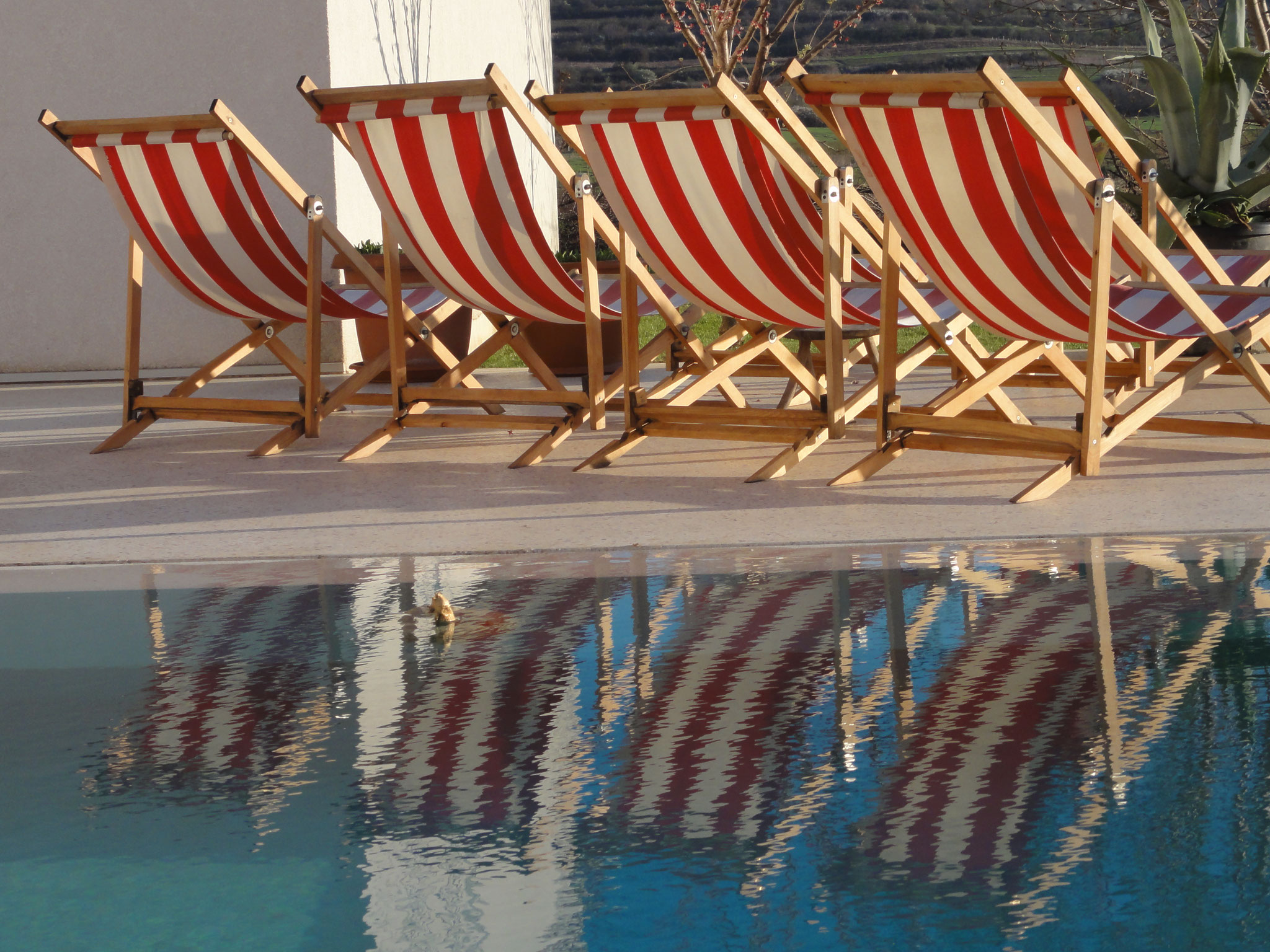 Deck chairs by the pool