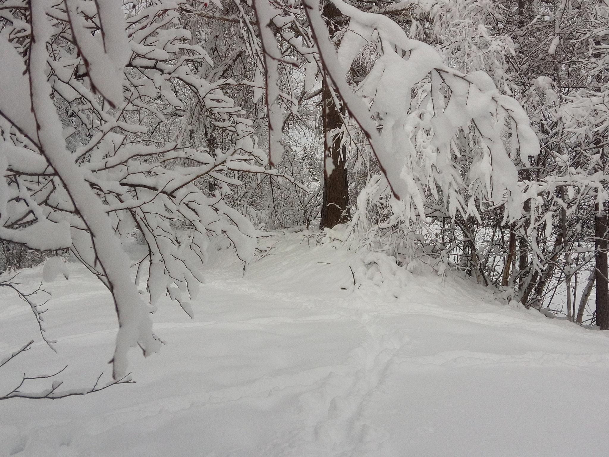 Schneezauber in Staudach St. Oswald