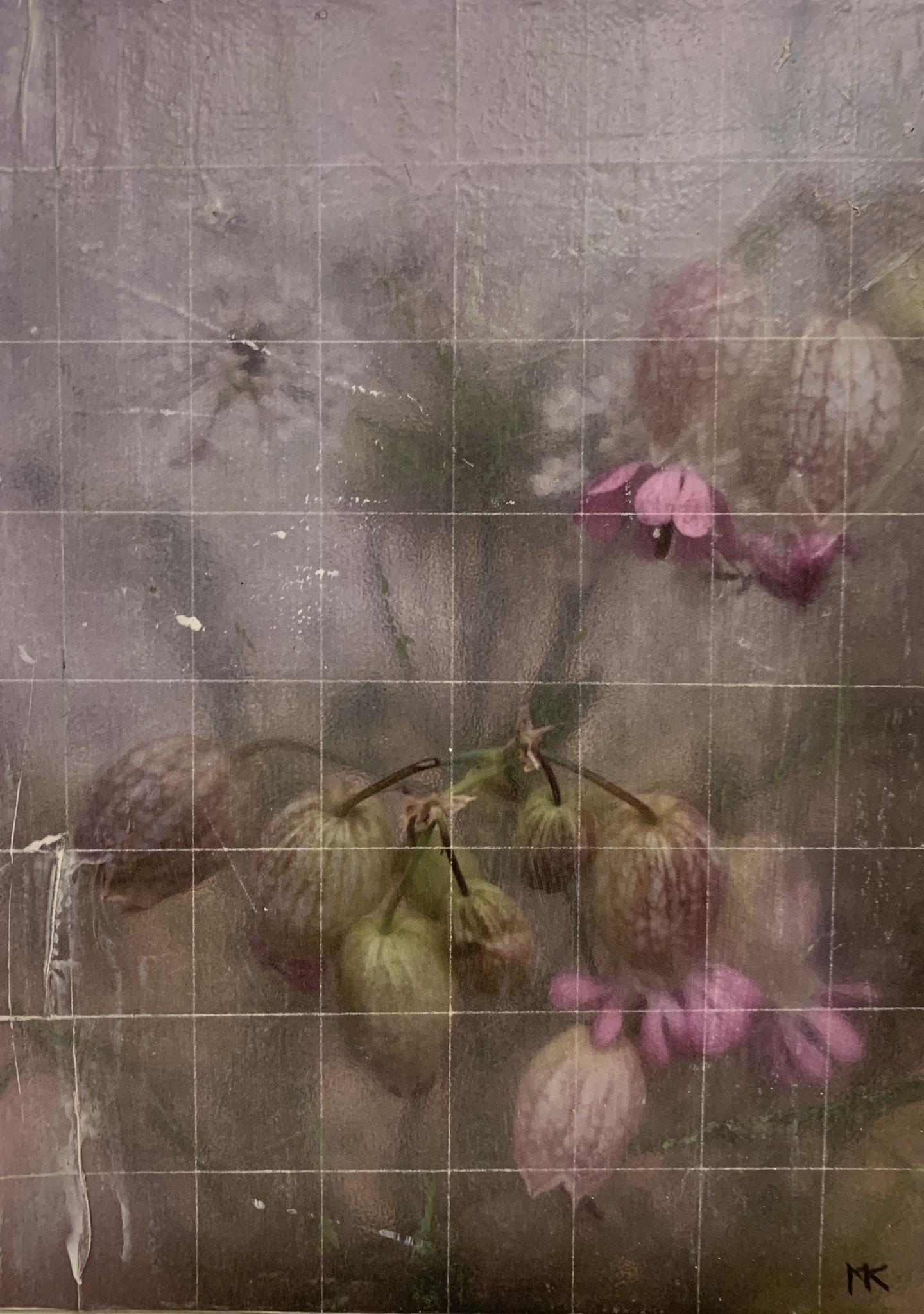 Silene Vulgaris_100x120cm (Collage)