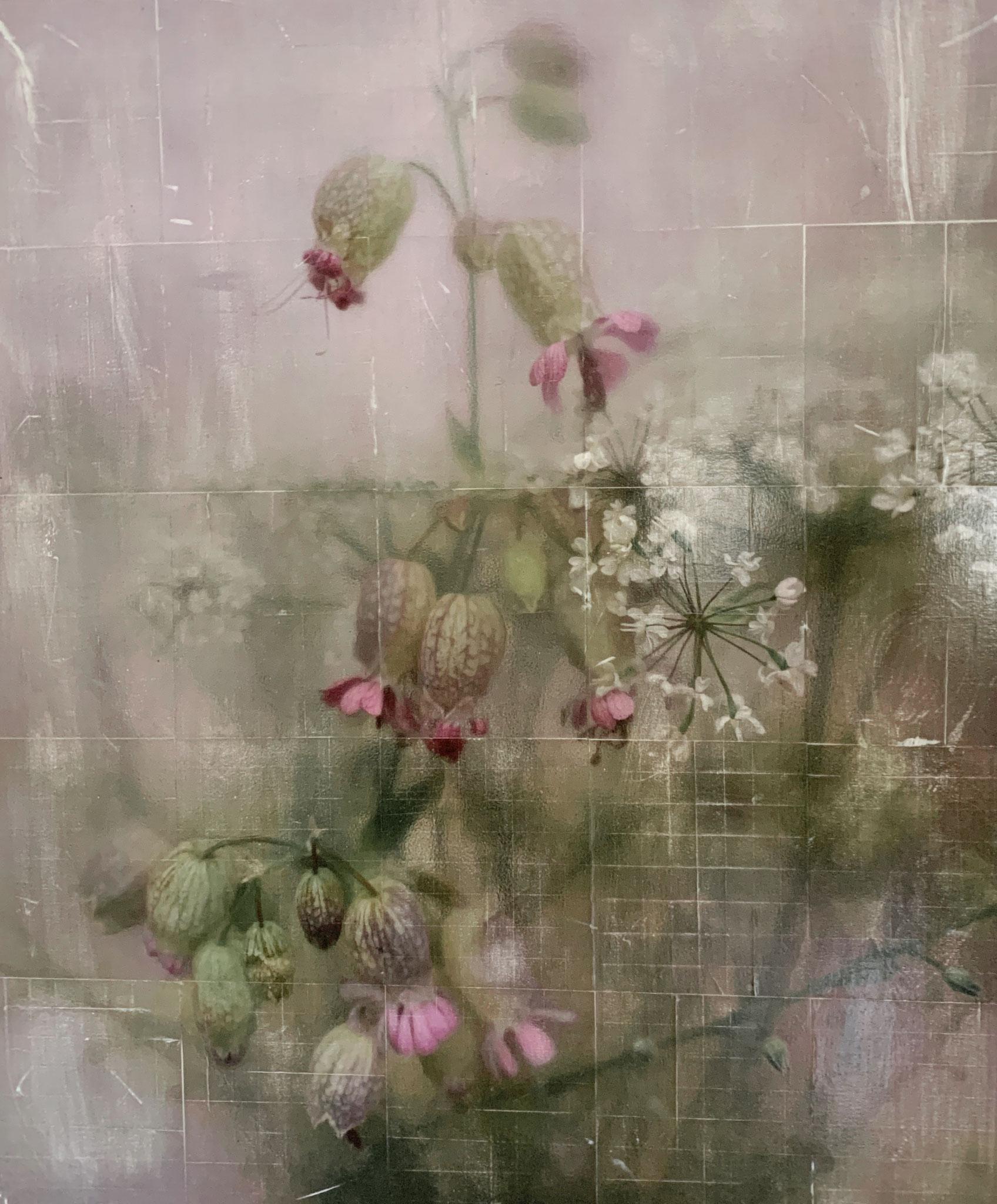 Silene Vulgaris_24x30cm (Collage)