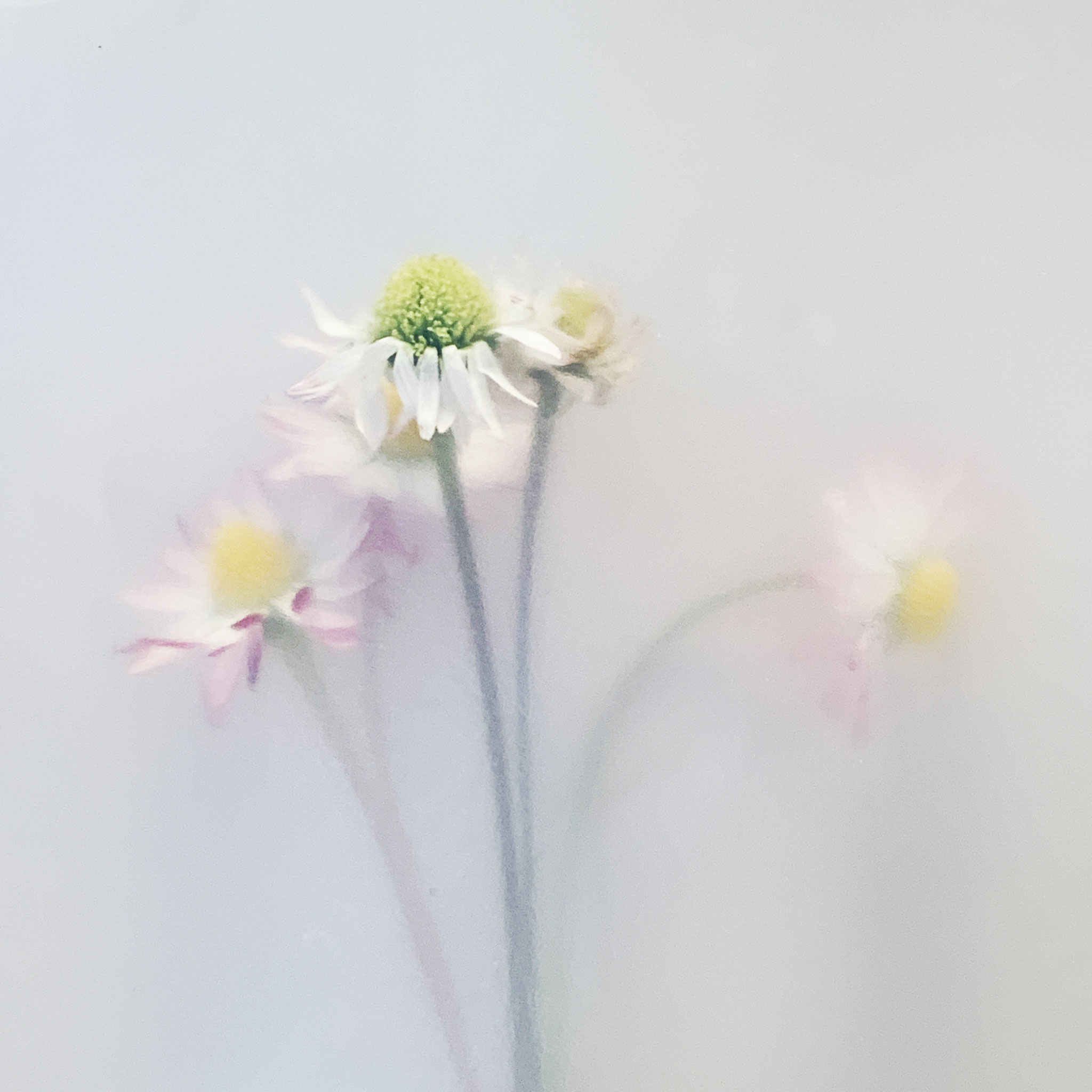 Wild Flowers (Fotografie)
