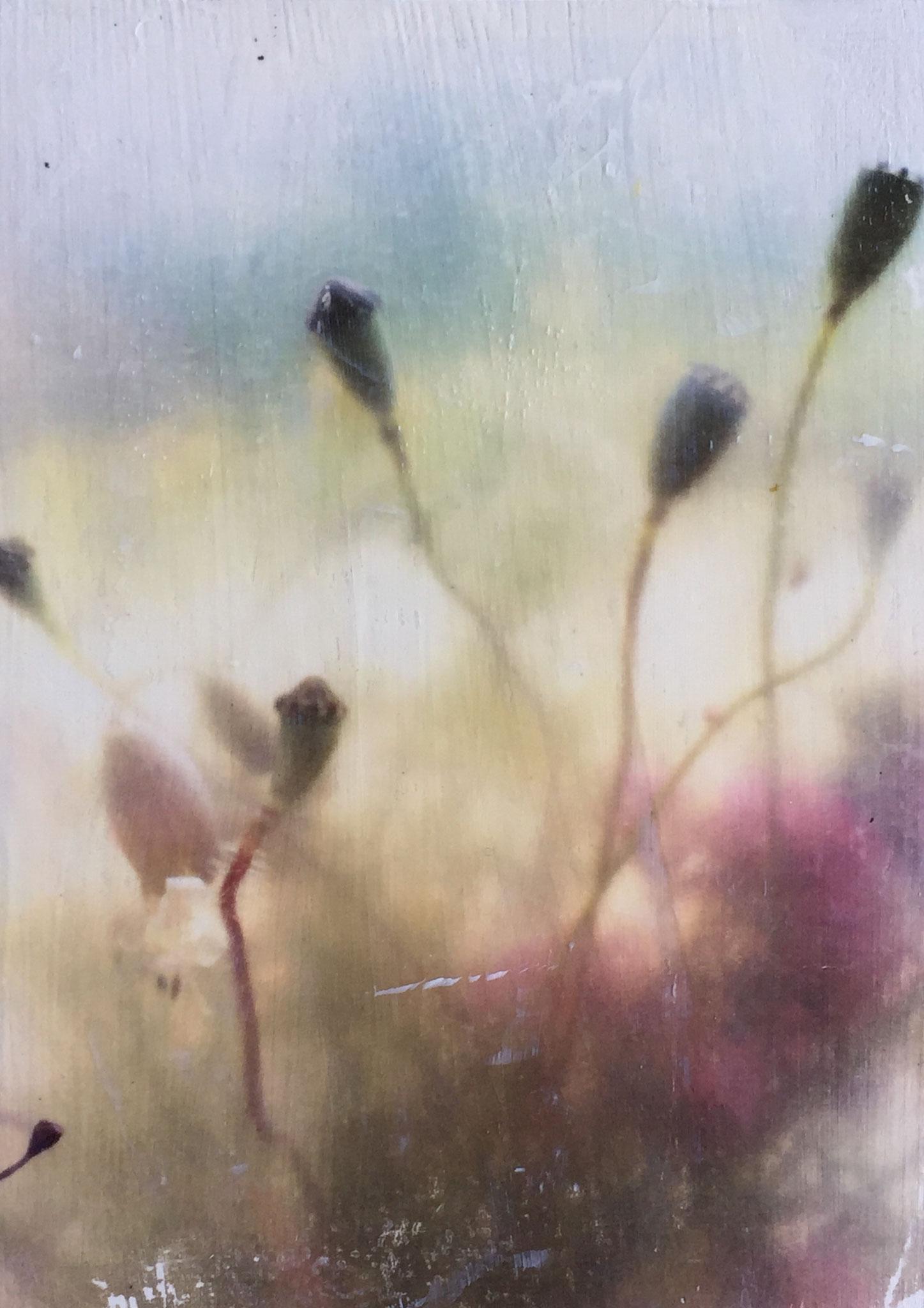 Poppy 4_Kleinformat (Fototransfer)