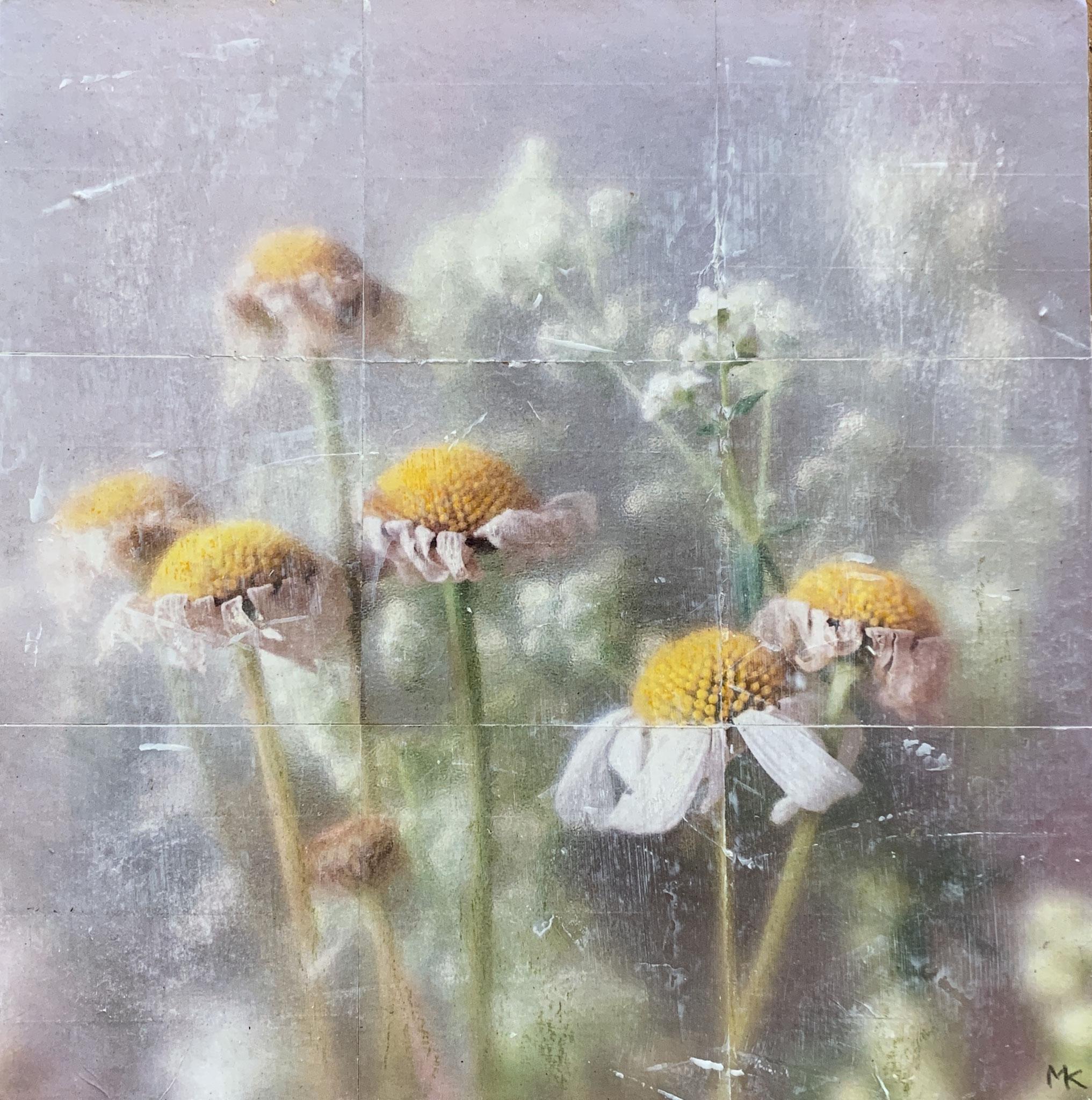 Leucanthemopsis Alpina_24x30cm (Collage)