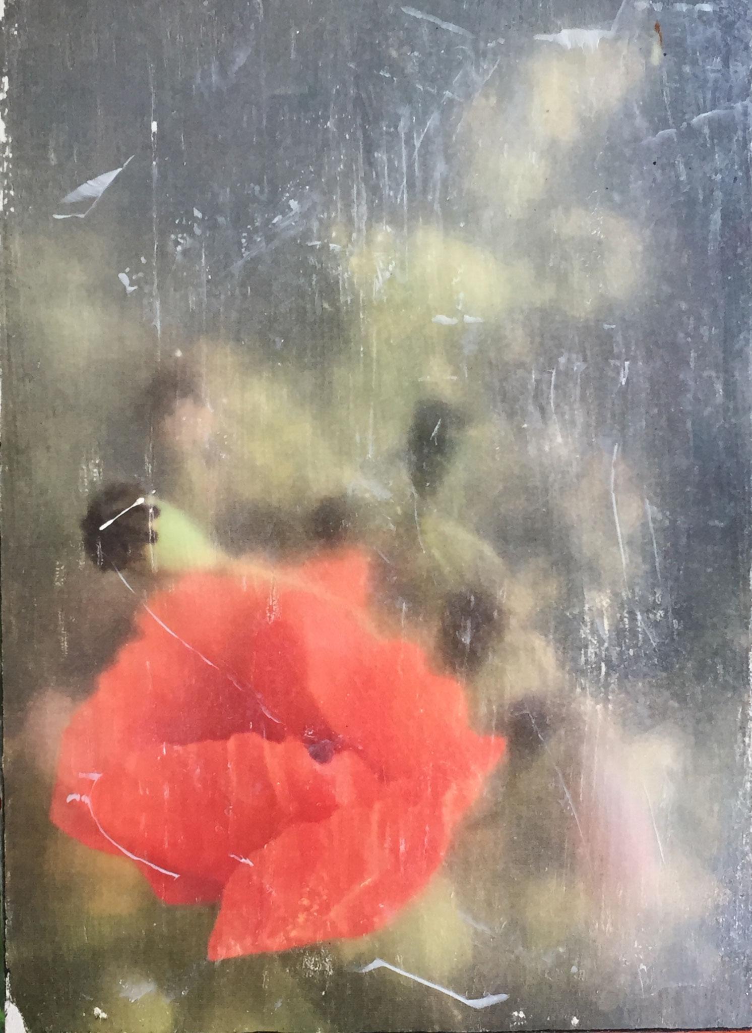 Wiesenblumen_Kleinformat (Fototransfer)