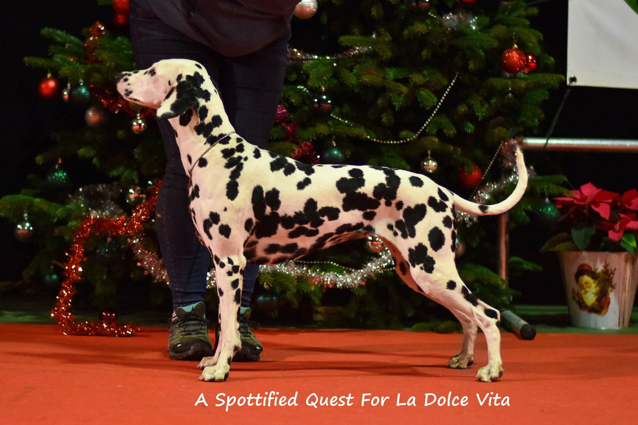 A Spottified Quest For La Dolce Vita, 16 months, Landen Christmas show 2018