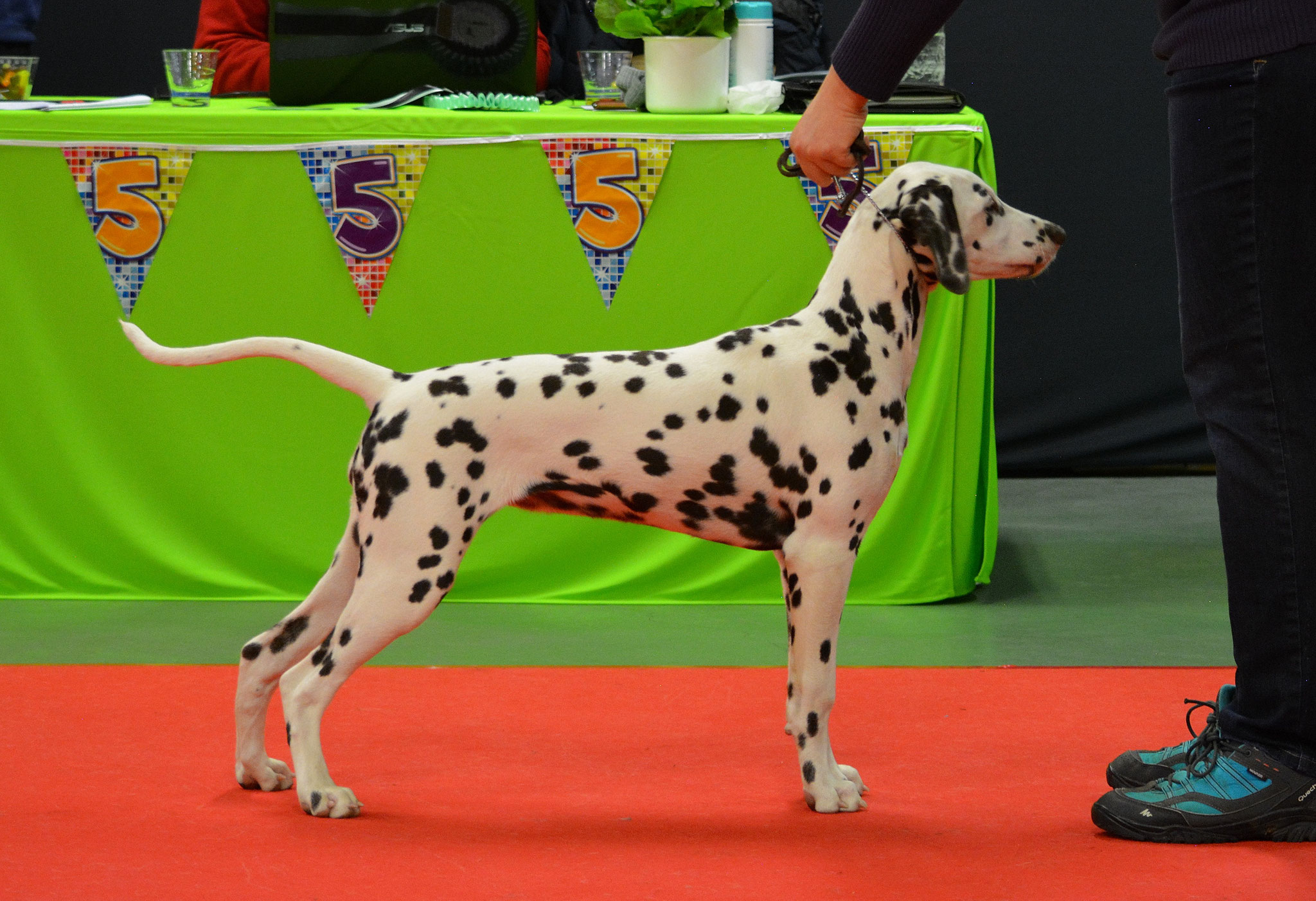 Candy Cane vom Teutoburger Wald, 4,5 months, clubshow Ring 13