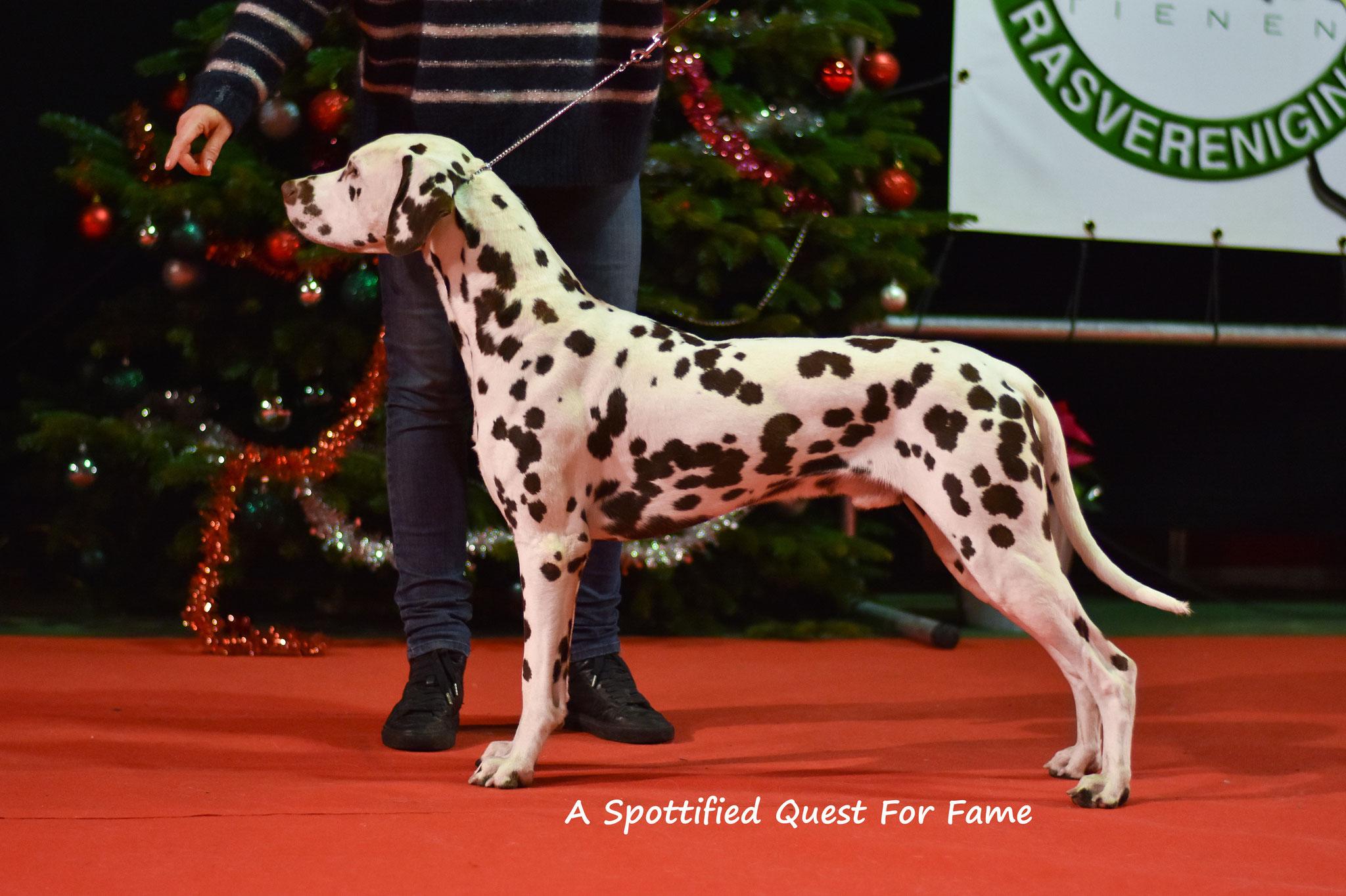 A Spottified Quest For Fame, aka Morris, Landen, 16 months