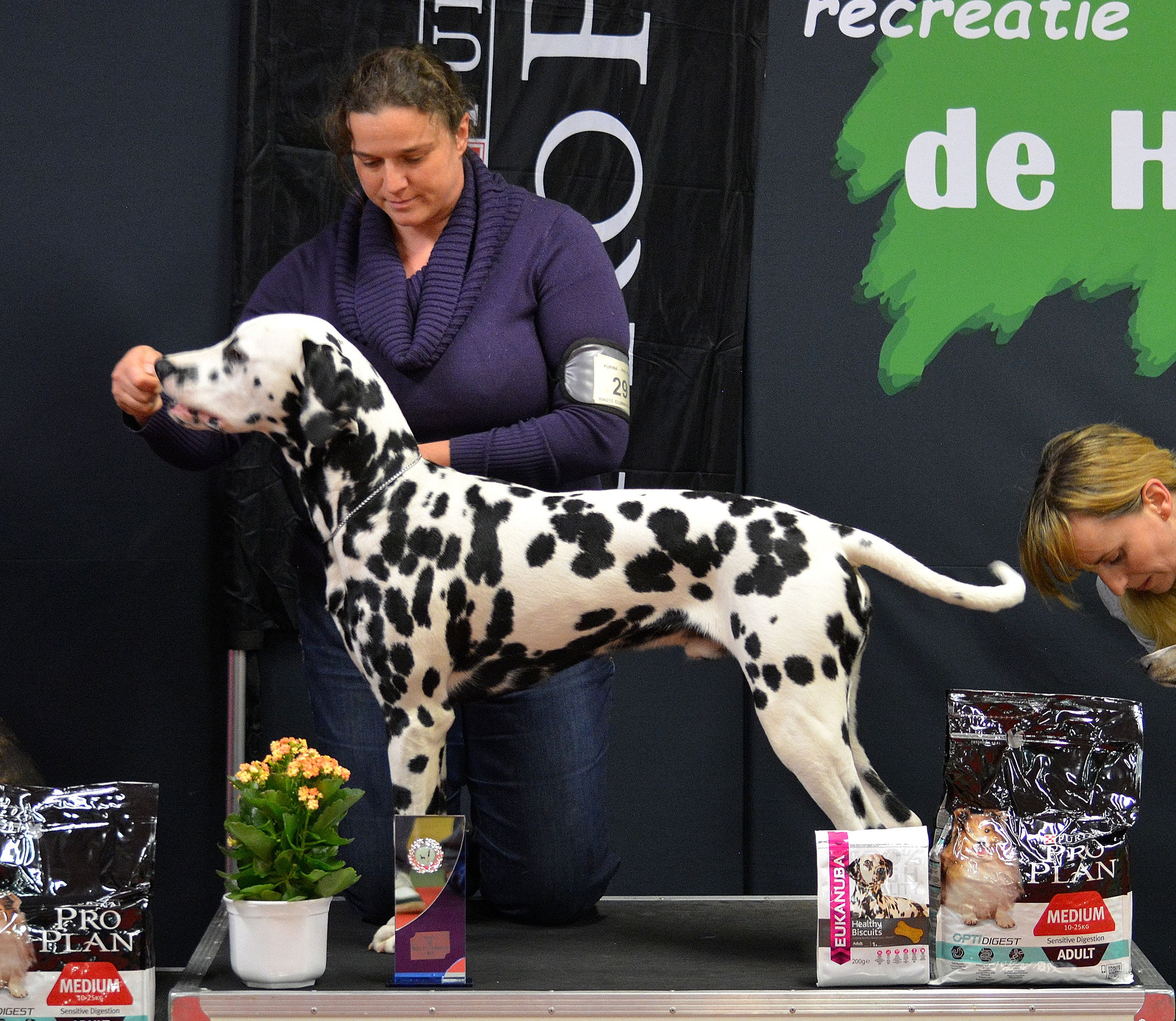 A Spottified Perfect Mambo, 7 months, BIS Junior, clubshow
