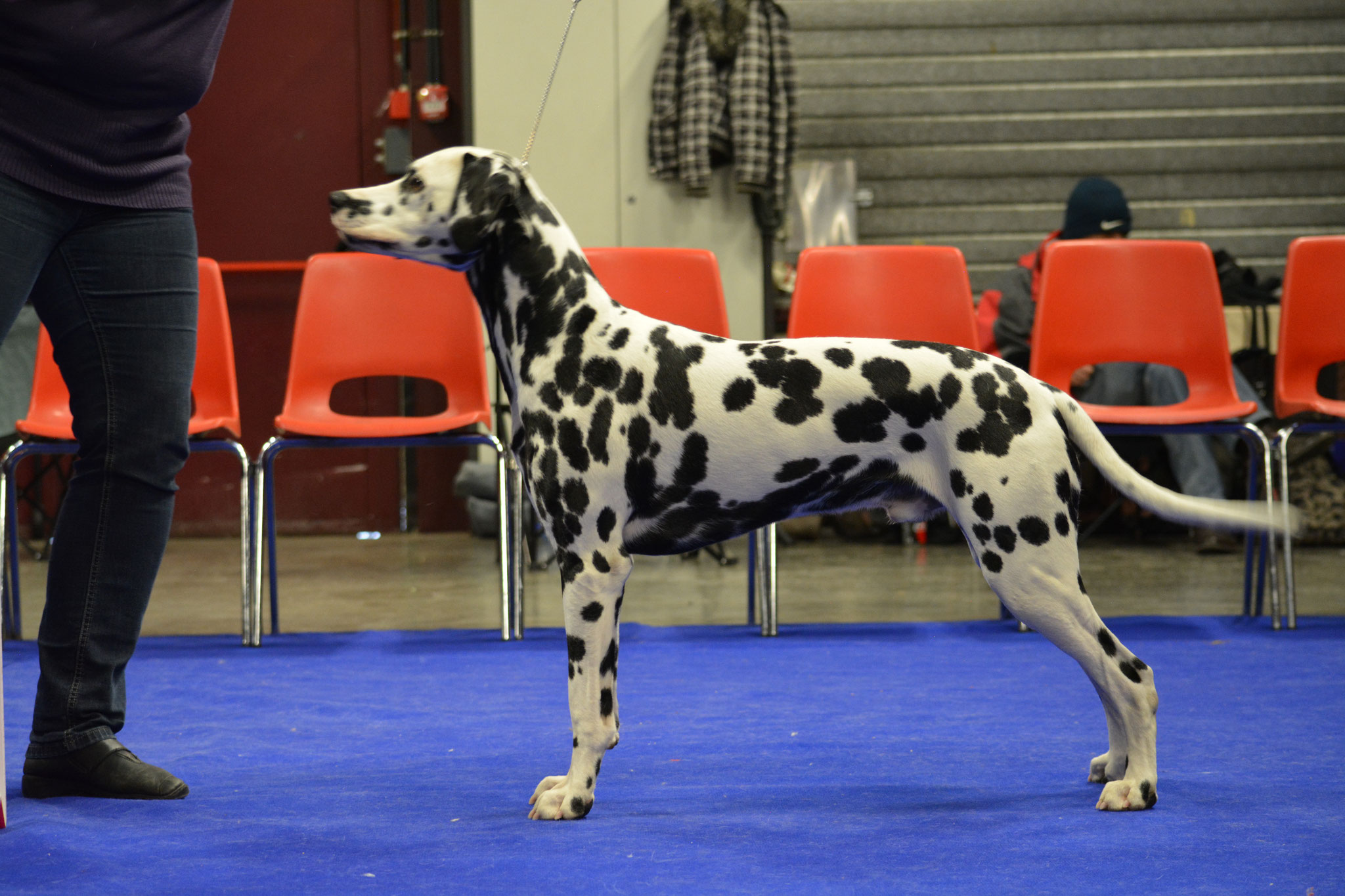 A Spottified Perfect Mambo, 9 months, Genk 2017