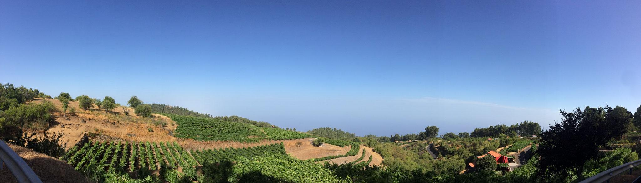 La Palma - Weinberg bei Puntagorda