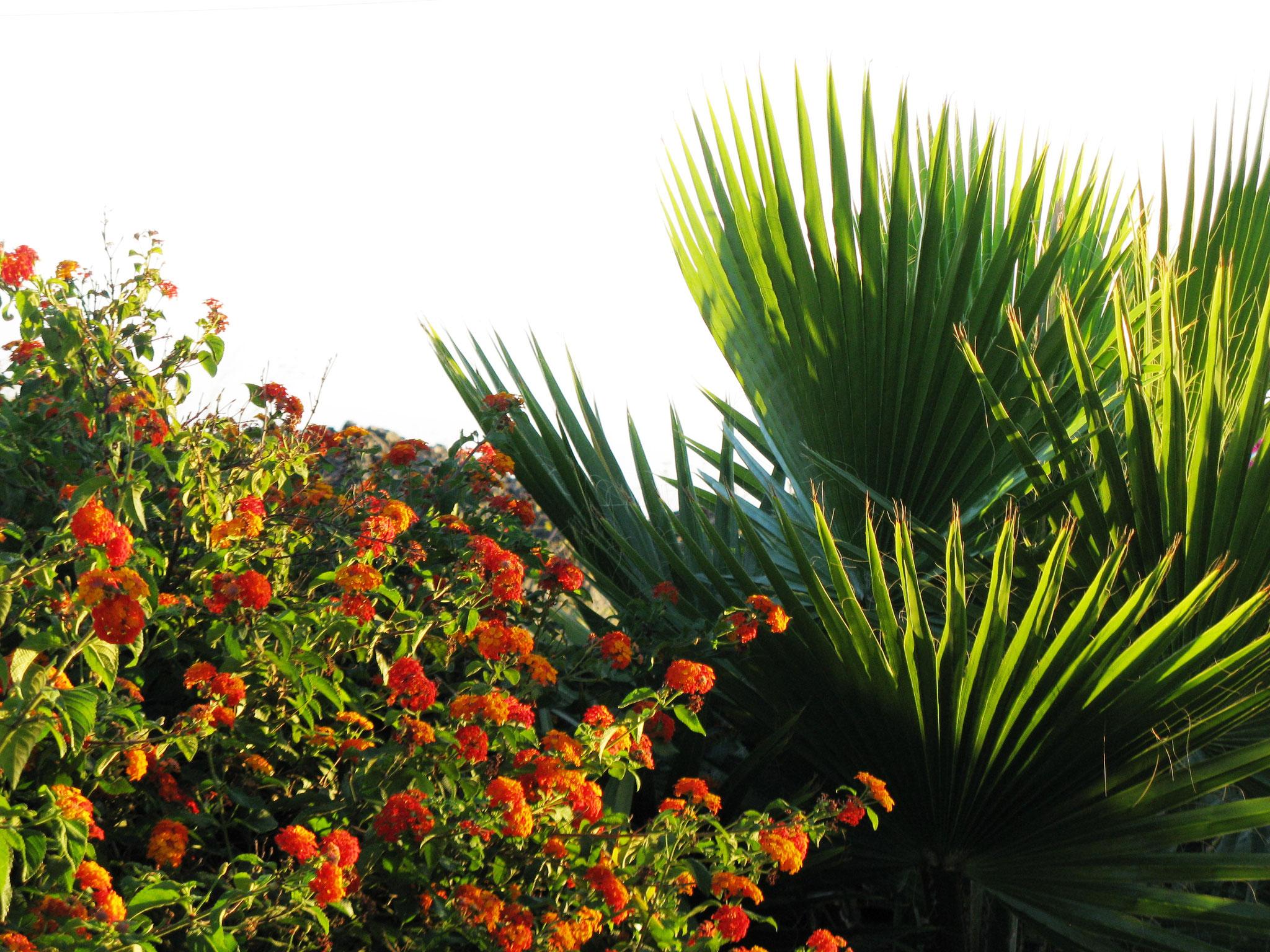 La Palma Ferienhaus Ferienwohnung Apartment direkt mieten