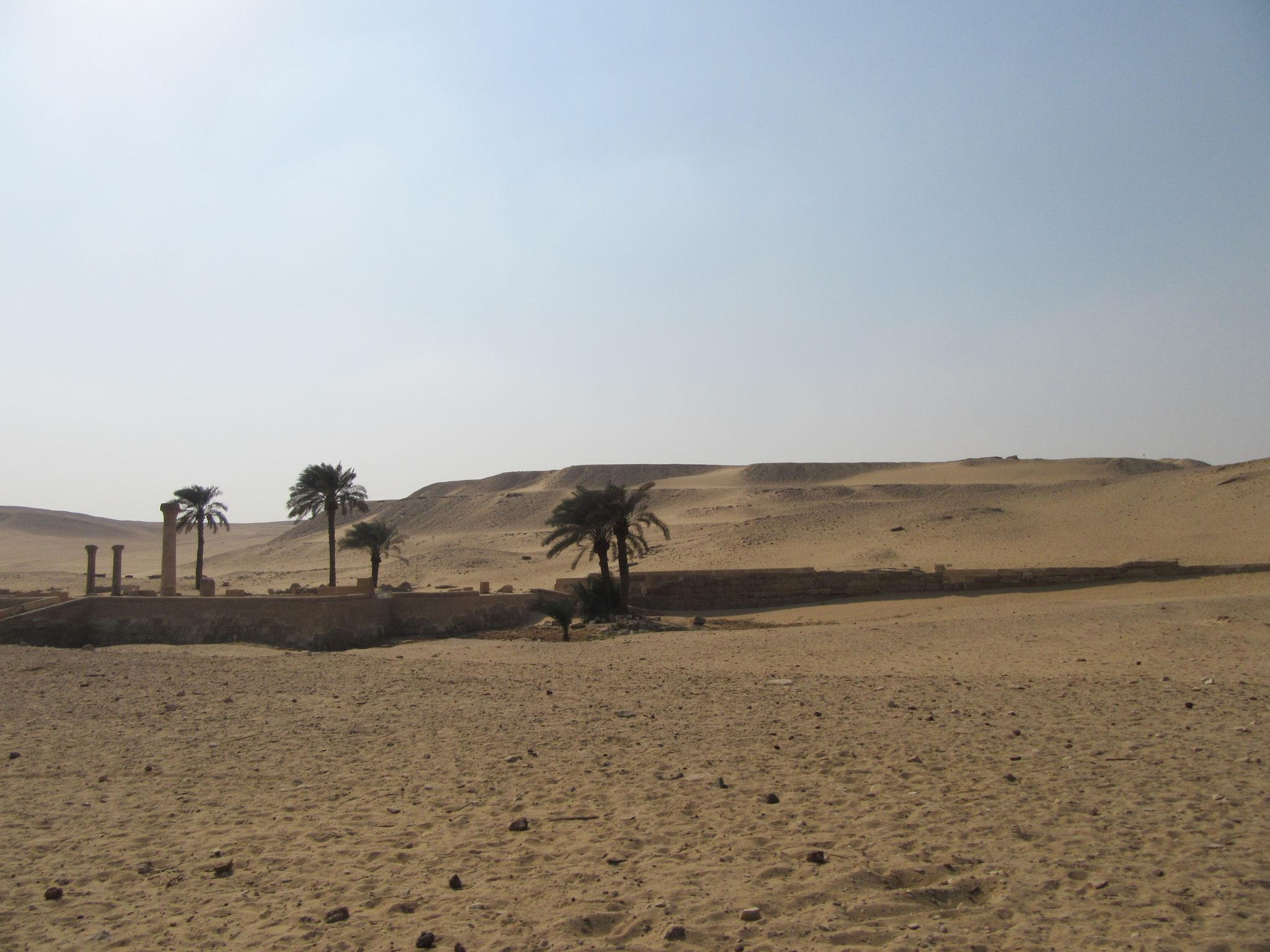 Mitten in der Wüste bei Sakkara