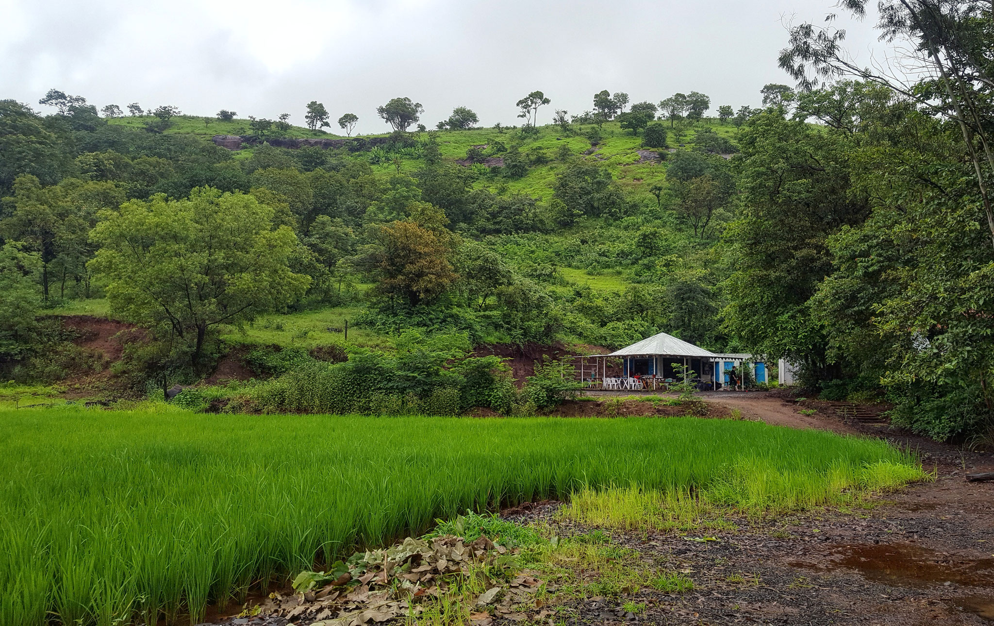 Campingplatz Deluxe zwischen Reisfeldern