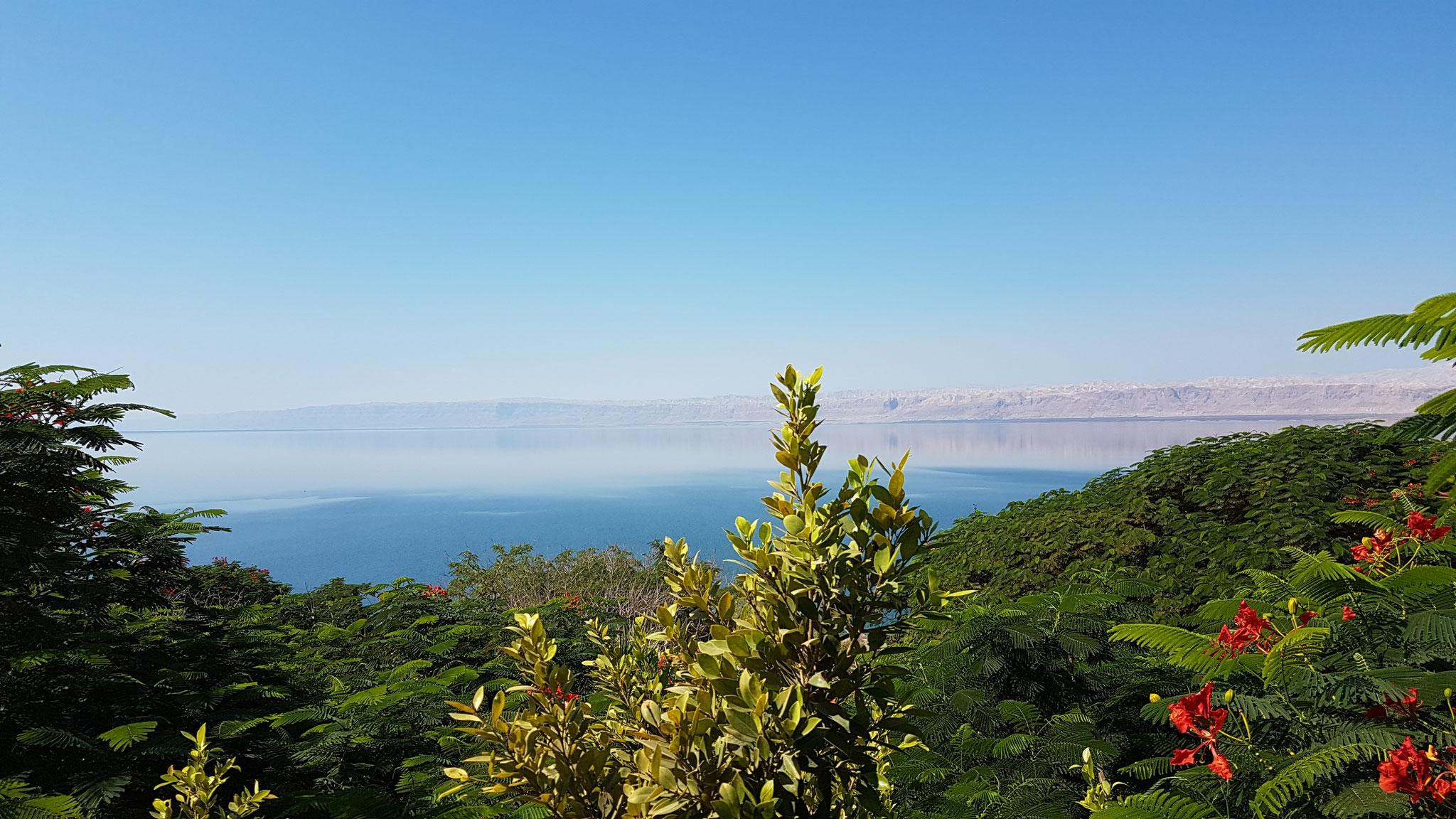 Nur selten rund um das tote Meer zu finden: Blühende Pflanzen und Blumen
