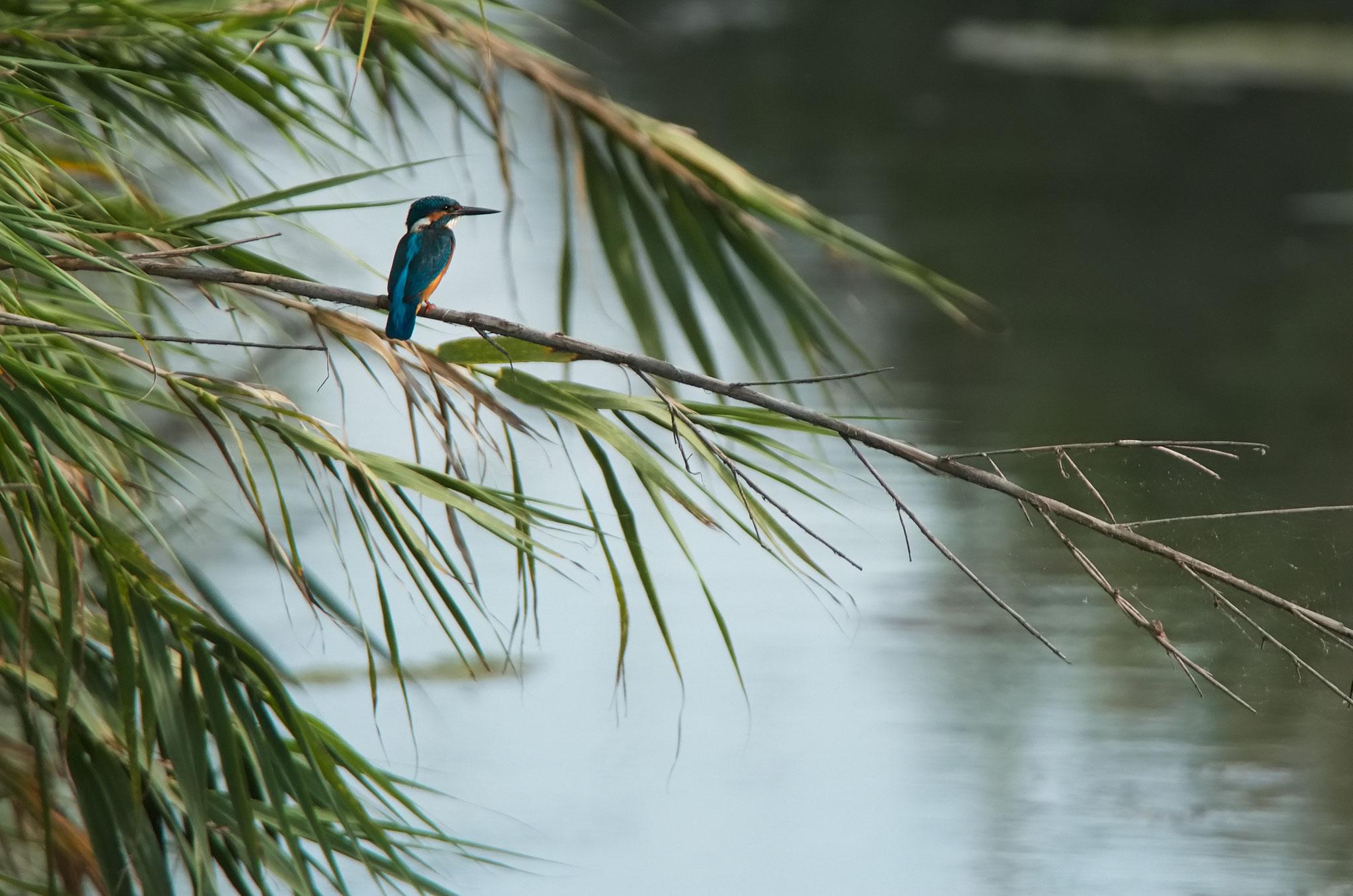 Septembre 2014 ~ Martin-pêcheur