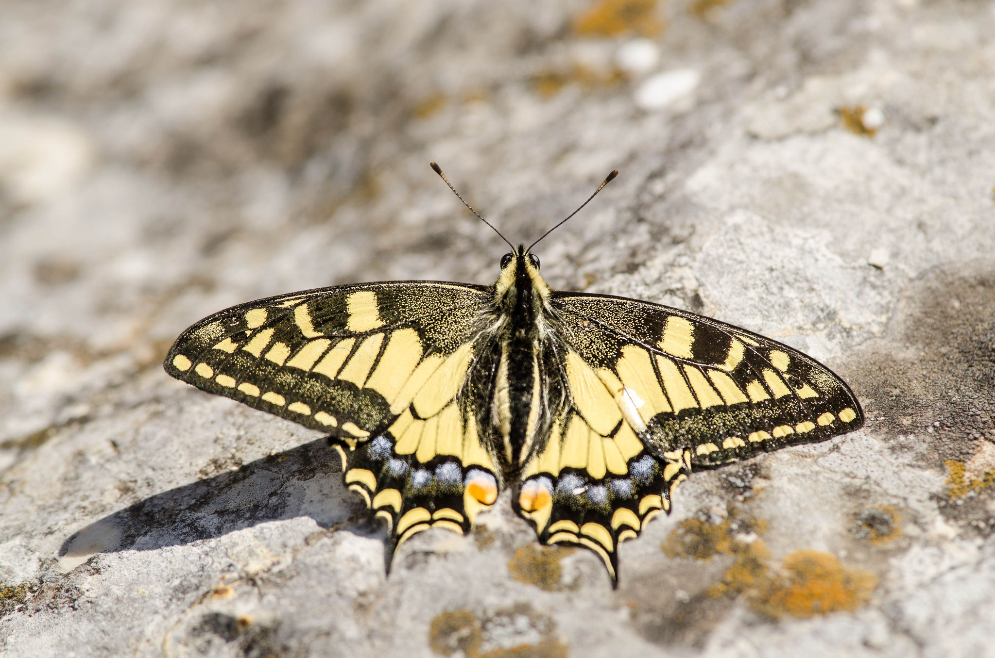 Mai 2014 ~ Machaon