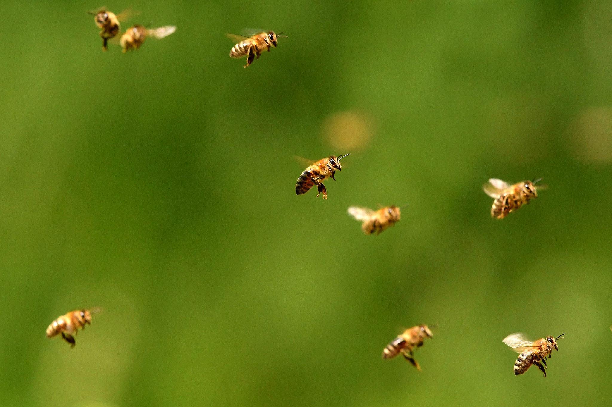 Mai 2016 ~ À l'entrée de la ruche