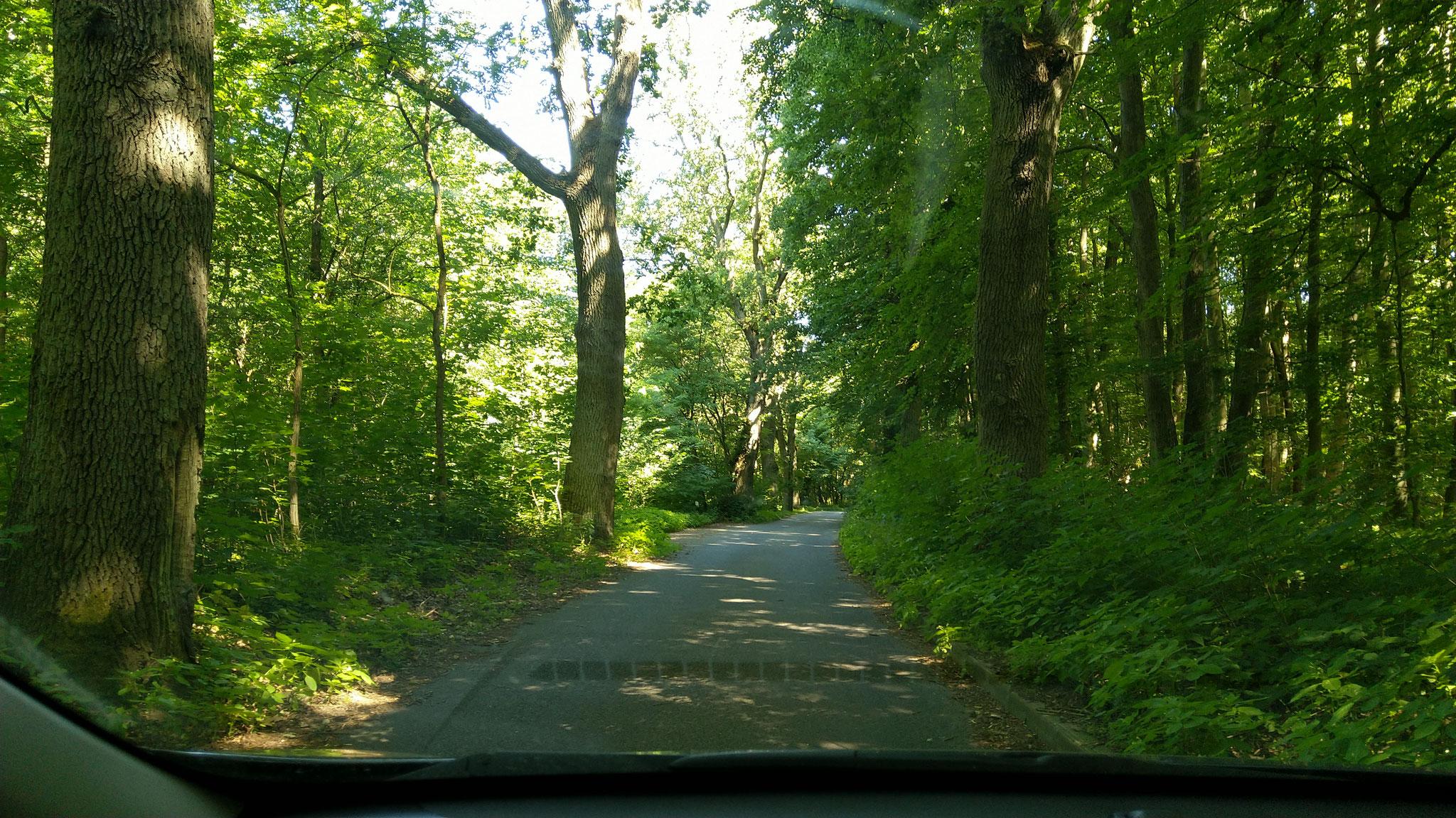 Hier gings noch gut voran: Die von kräftigen Bäumen gesäumte Straße nach Neythymen (gefühlte 3 Häuser, aber mit Bushaltestelle)