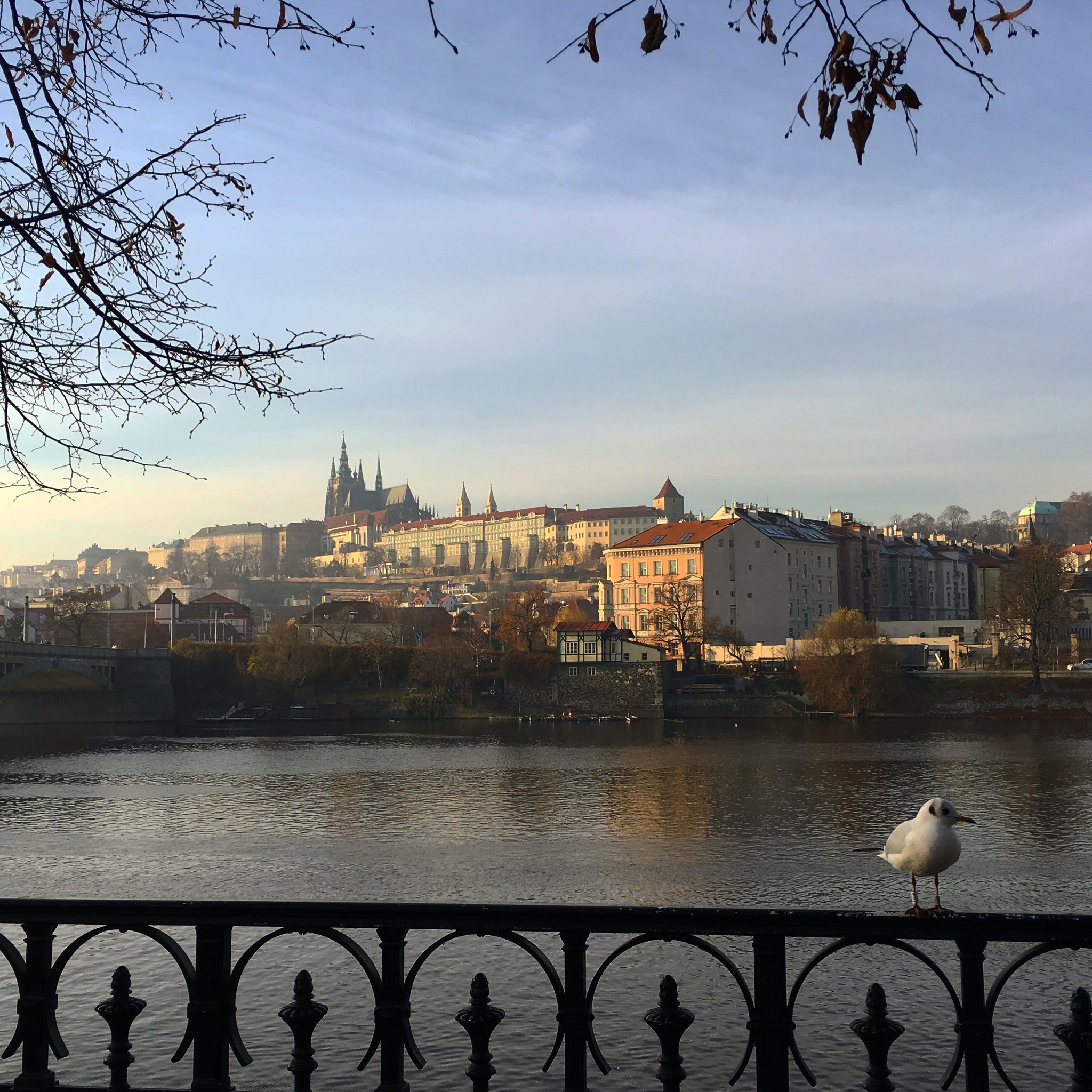 Blick über die Moldau zur Prager Burg