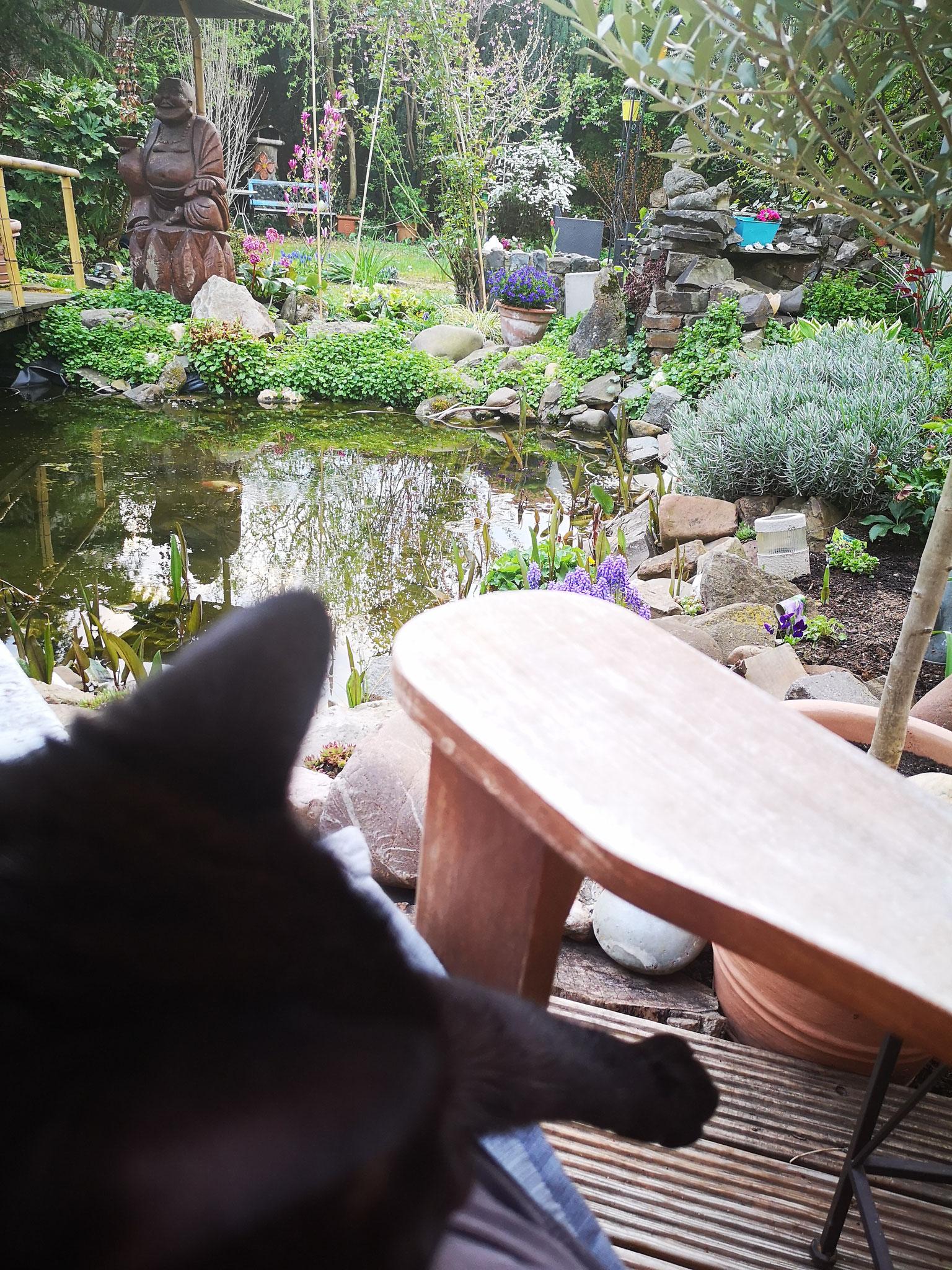 Es gibt viele Tiere im Seminargarten Köln: Katzen, Unken, Fische, Vögel, Regenwürmer...