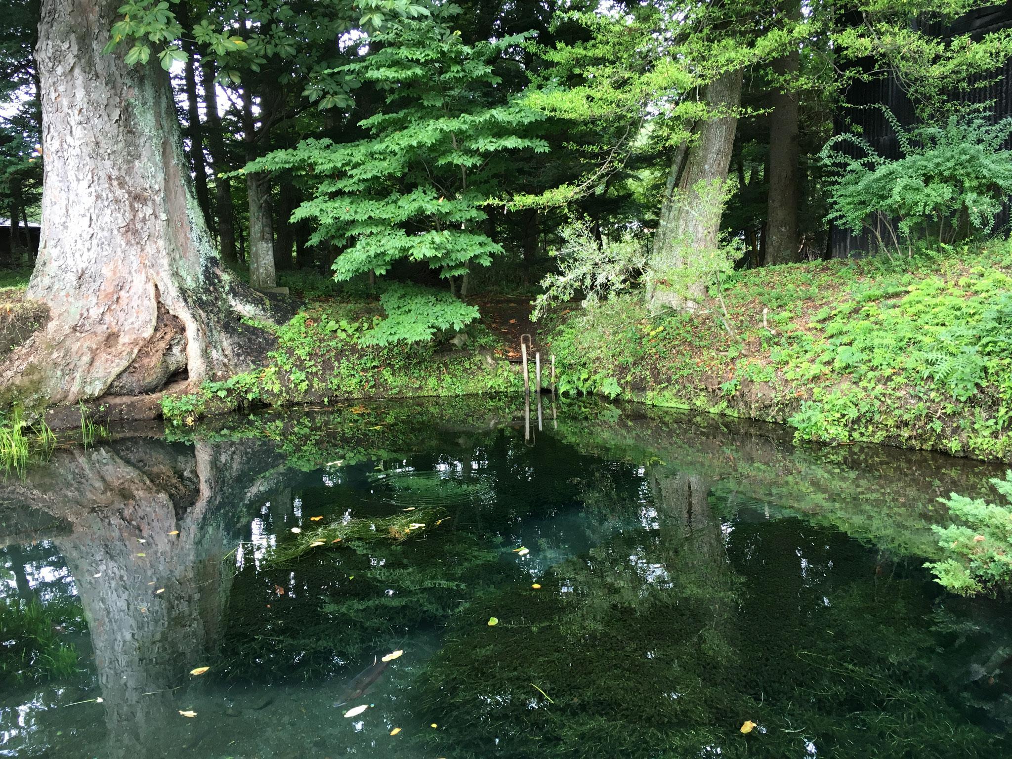 無くした物はどんなに探しても見つからないそうです。村人達は、「この池で洗い物をすると神の怒りをかう」と語り継いでいます。