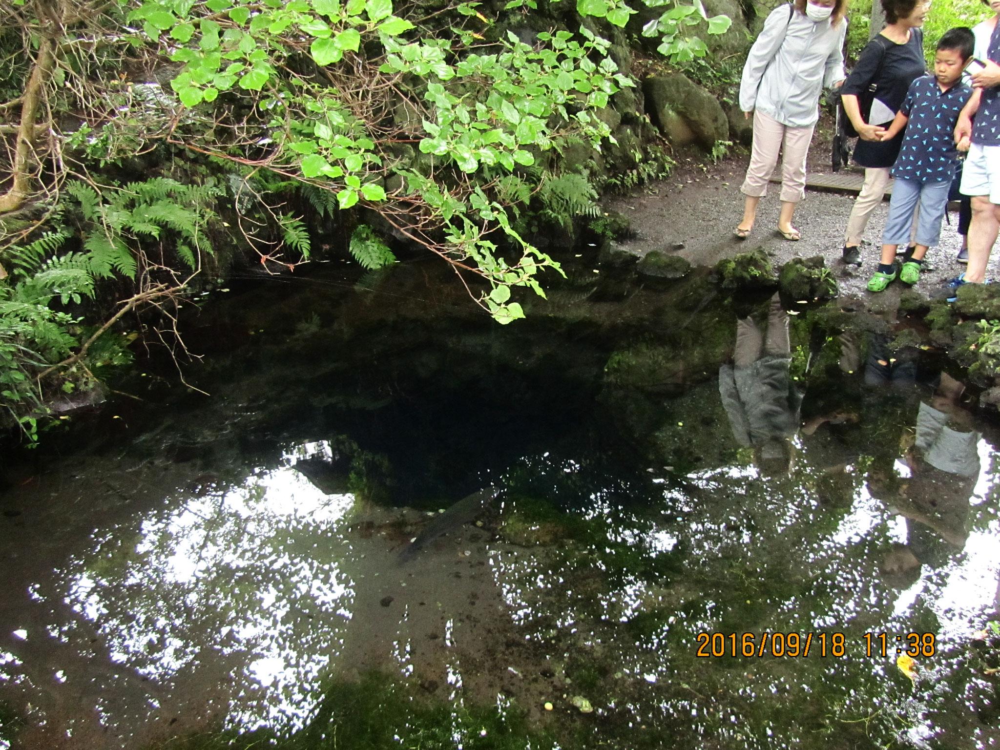 お釜池(おかまいけ)。昔、この池のほとりに年老いた父と二人の娘が暮らしていました。娘達が洗濯していると、大きなガマガエルが現れ、妹を水中に引きずり込んでしまったそうです。そのため、オオガマ池とも呼ばれます。