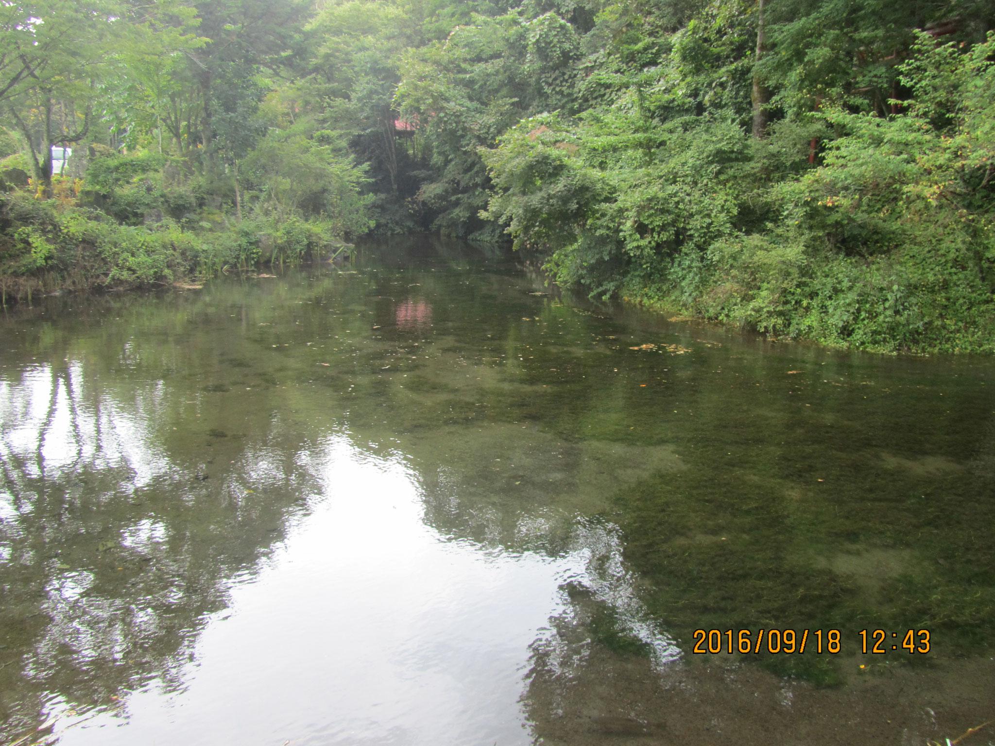 出口池(でぐちいけ)。富士登山を目指す行者(ぎょうじゃ)達は、この水で穢(けが)れを祓(はら)いました。そして、この水を携(たずさ)える事で無事に登山が出来ると信じられています。「精進池」とも呼ばれるゆえんです。