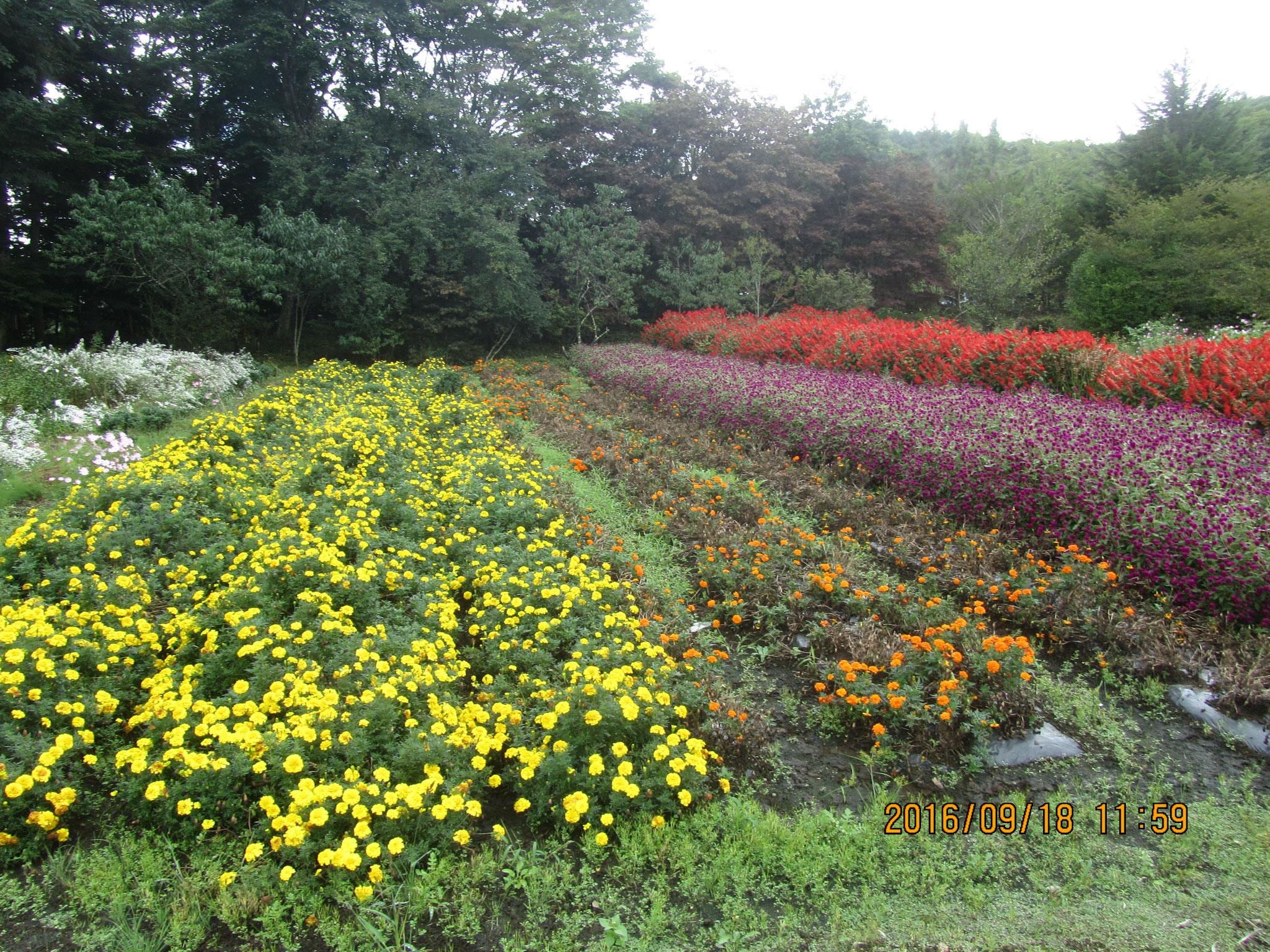 秋の花々が見事に咲き乱れています。