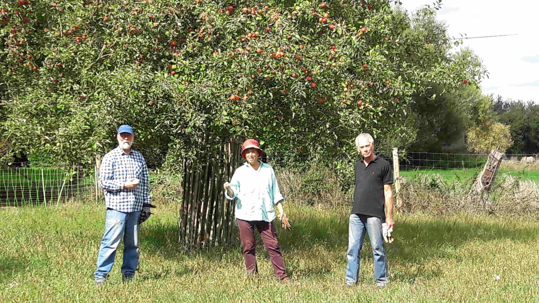 Apfelernte Quelle: NABU Rhein Erft