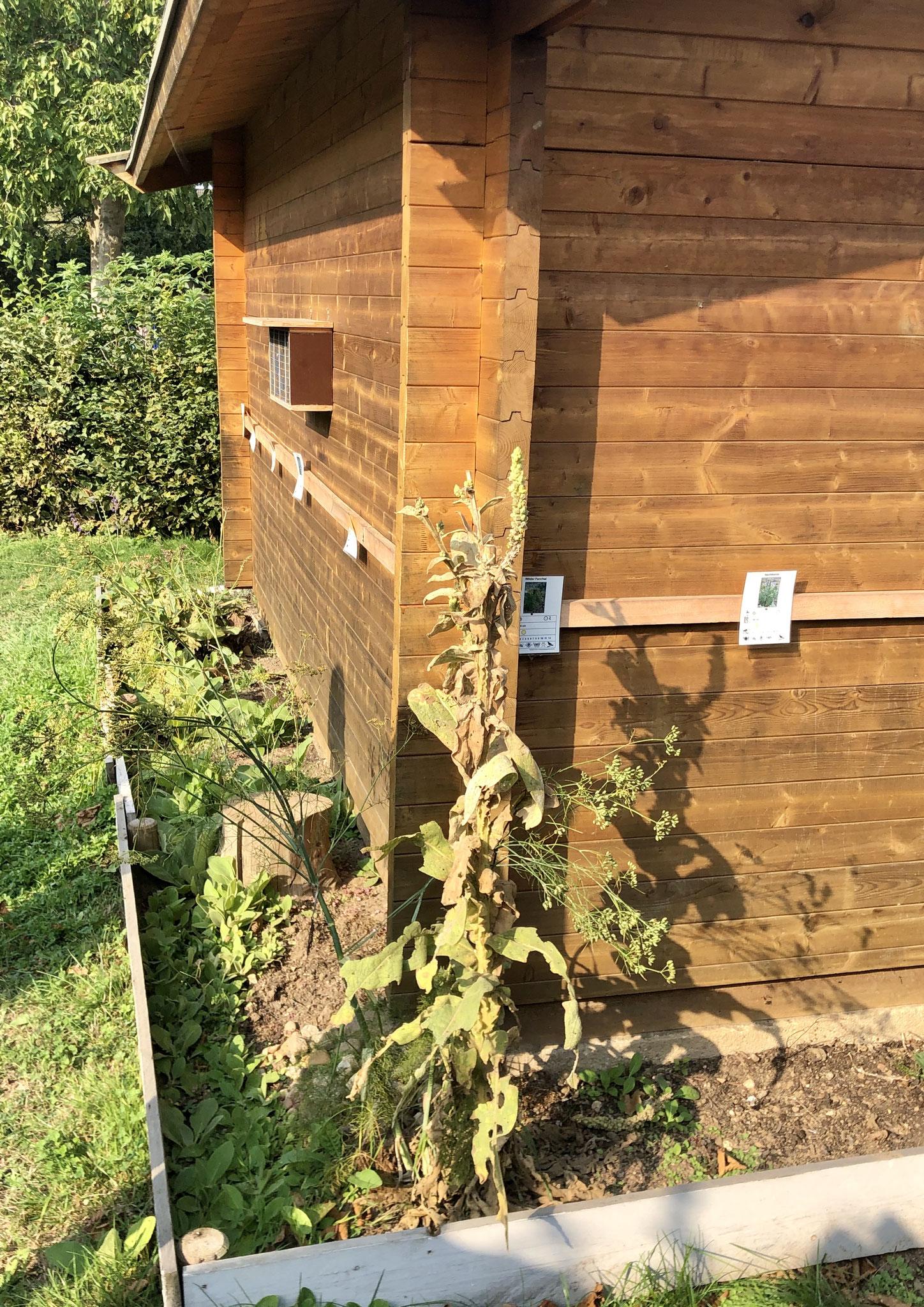 Grünstreifen mit Schmetterligspflanzen am Gartenhaus Quelle: NABU NRW