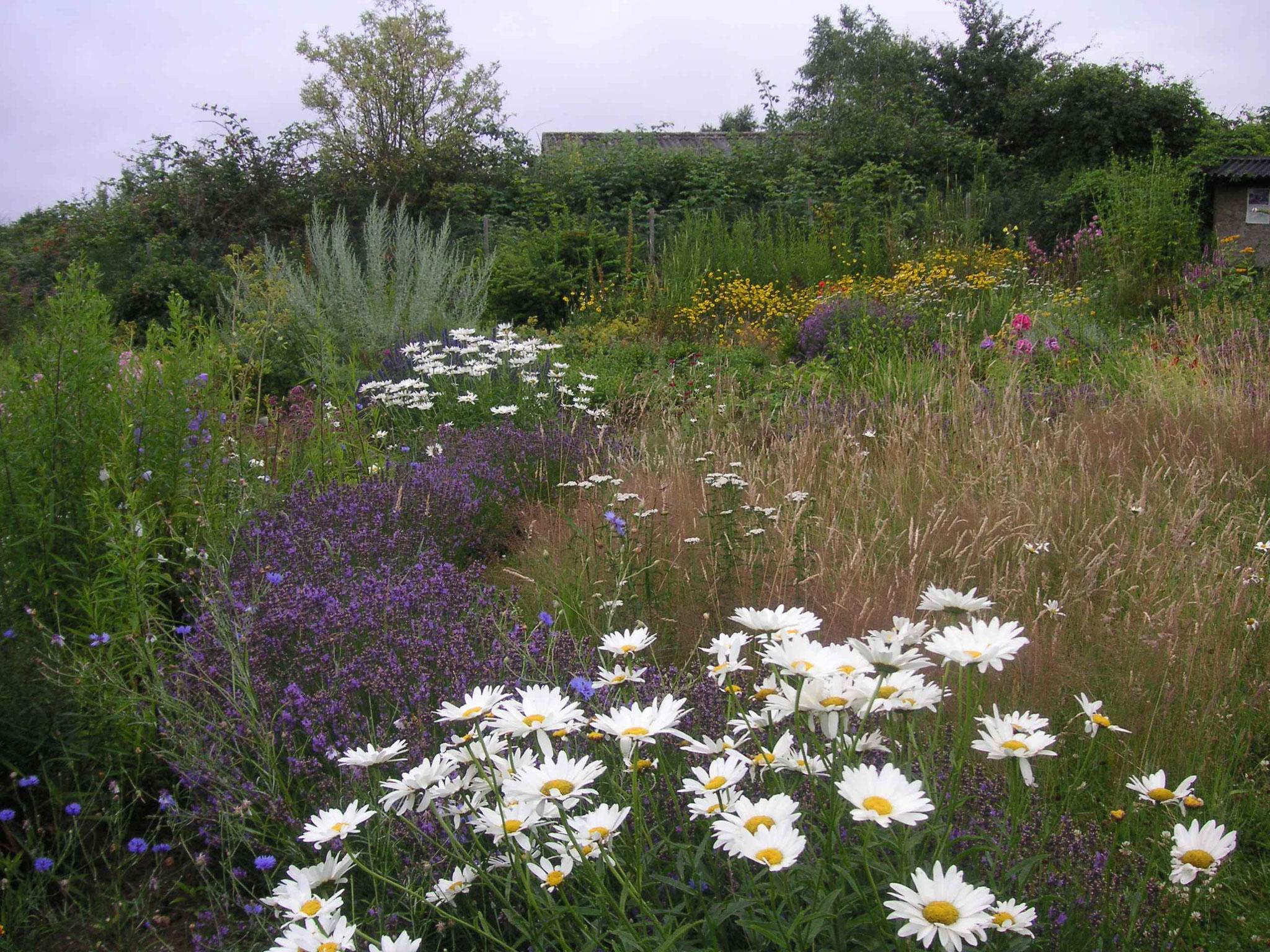 Teilansicht der Wiese, vorn die Blumenrabatte mit Lavendelhecke, Gräsern und Schafgarbe, Quelle: Gisela Wartenberg
