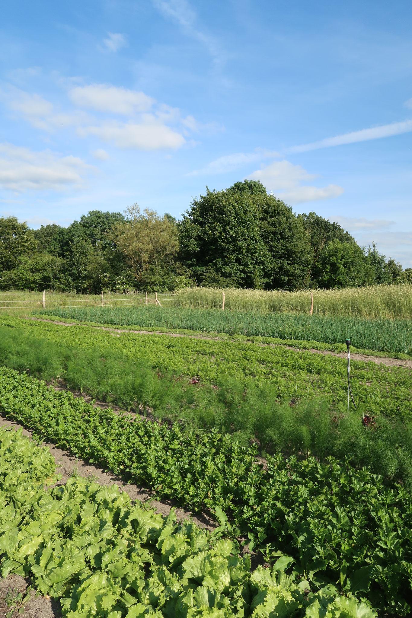Die Beete aus dem letzten Jahr sind wieder neu bepflanzt