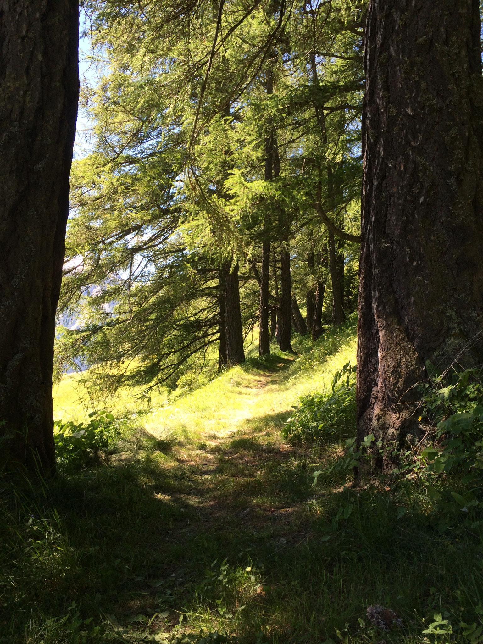 Auf einer Wanderung im Wallis