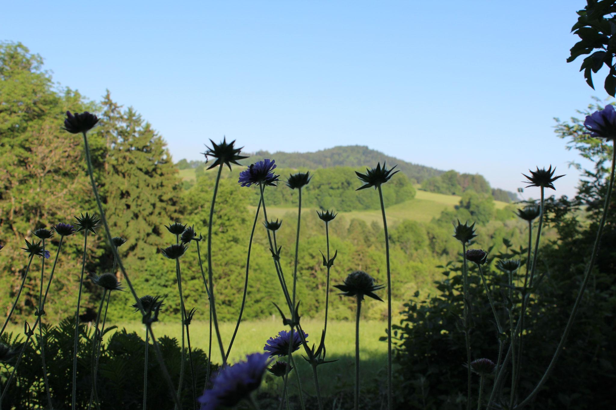 Blick vom Garten, worin die Kräutertage stattfinden