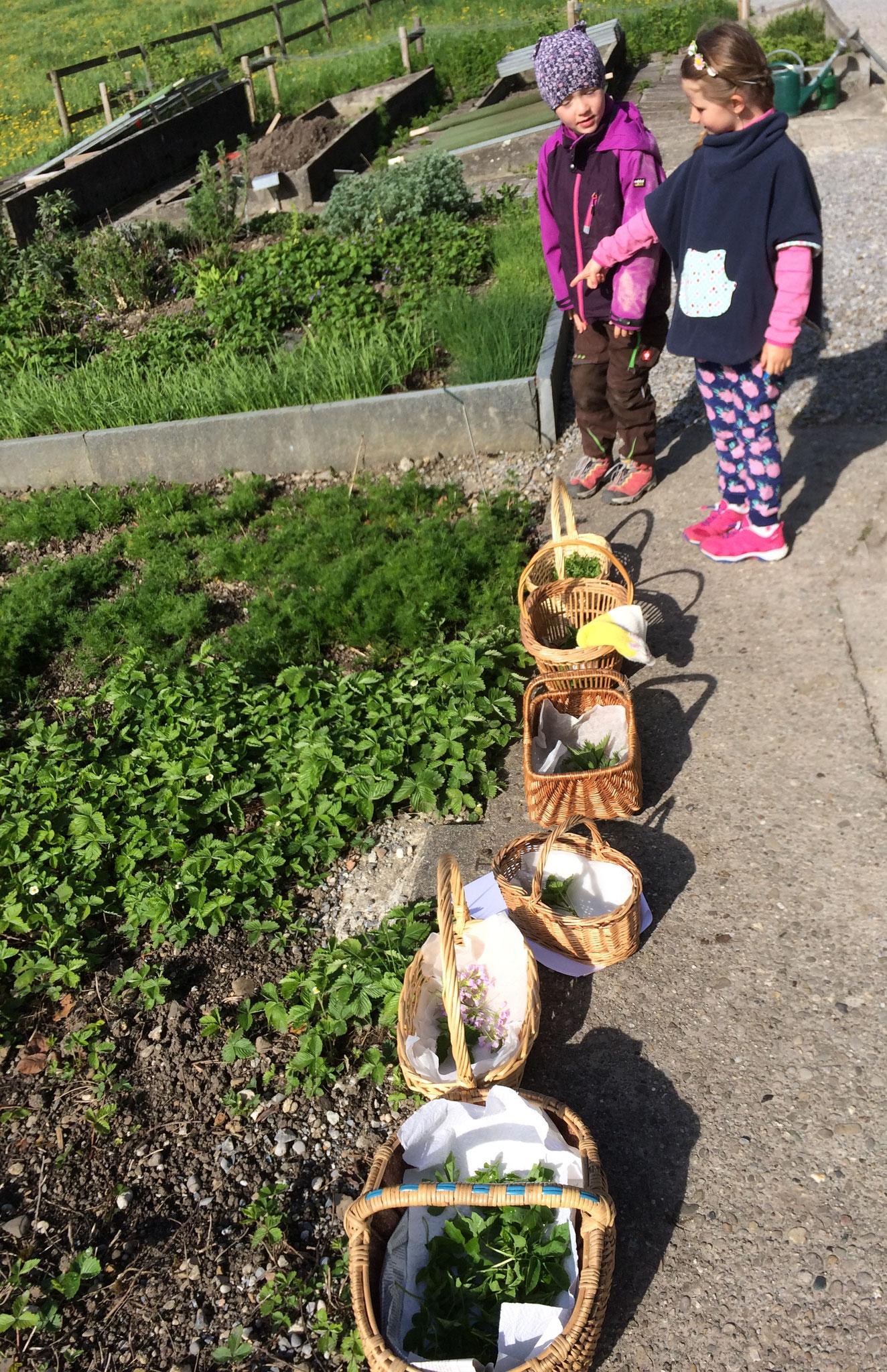 Die Körbe stehen bereit zum Kräuter sammeln