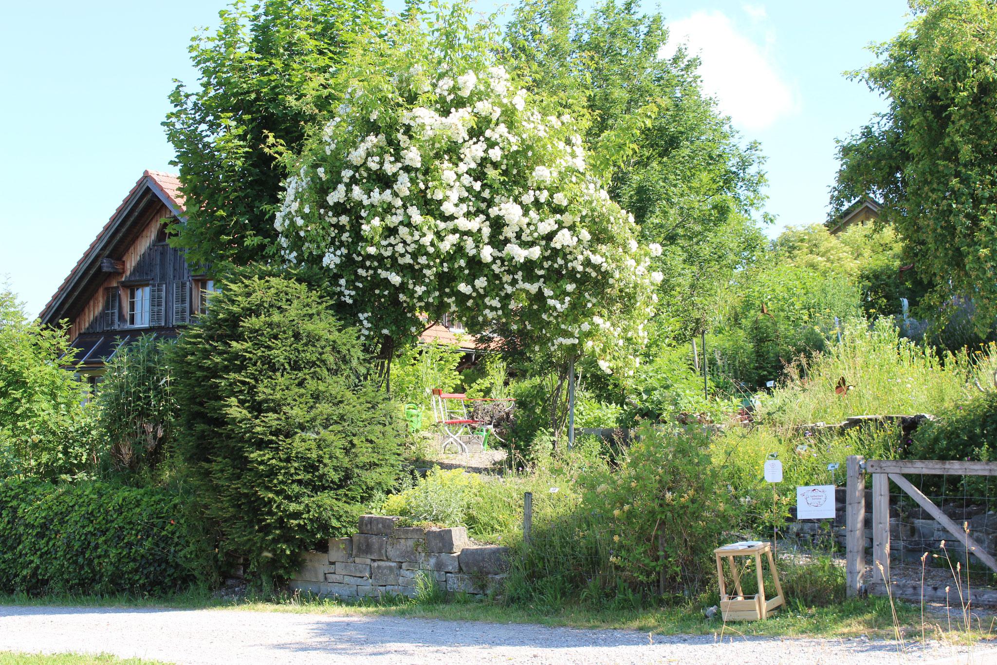 Blick vom Eingang zum Garten an der Eschenstrasse 10