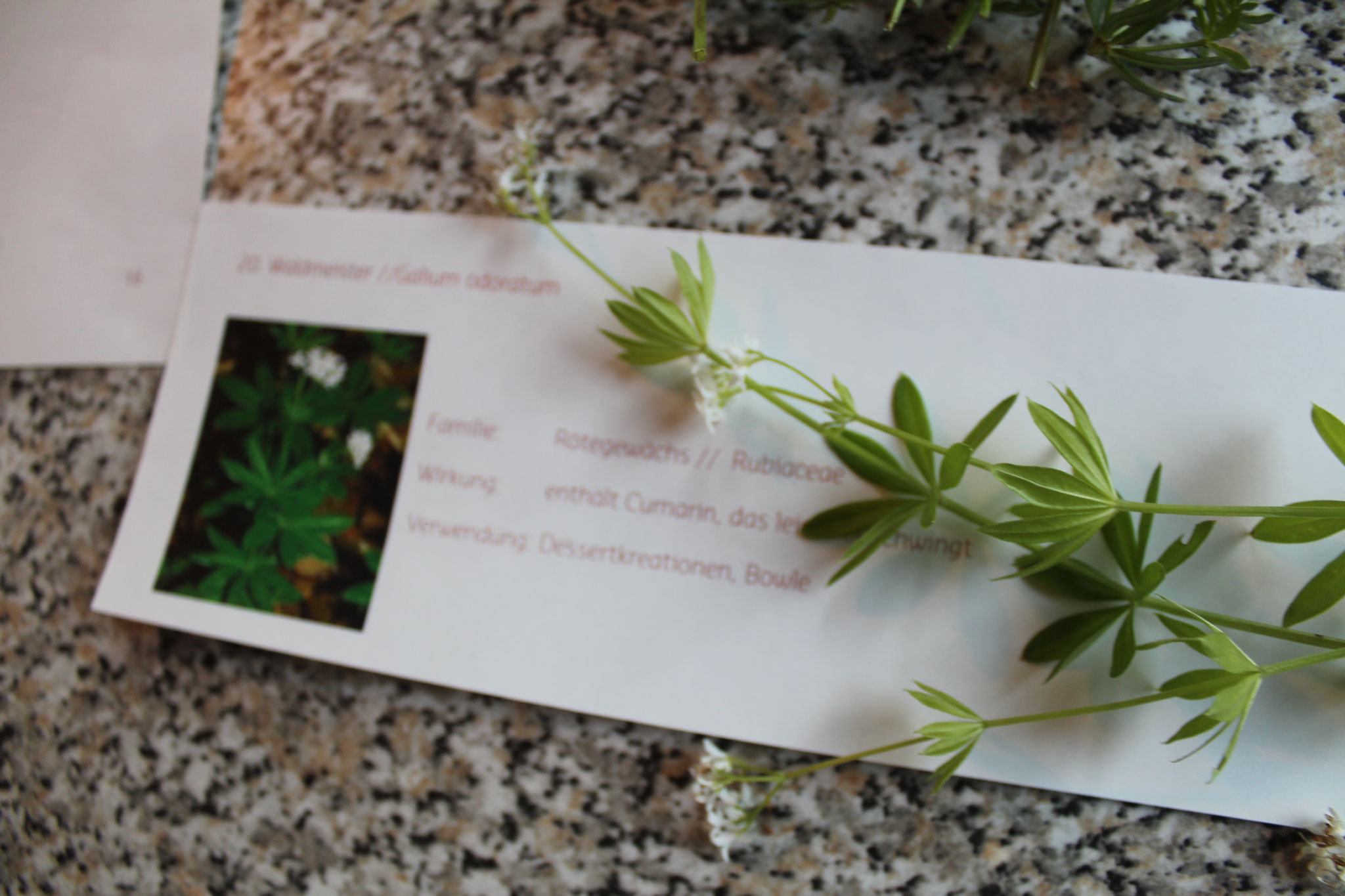 Das Detail eines Pflanzenporträts, womit wir lernen werden