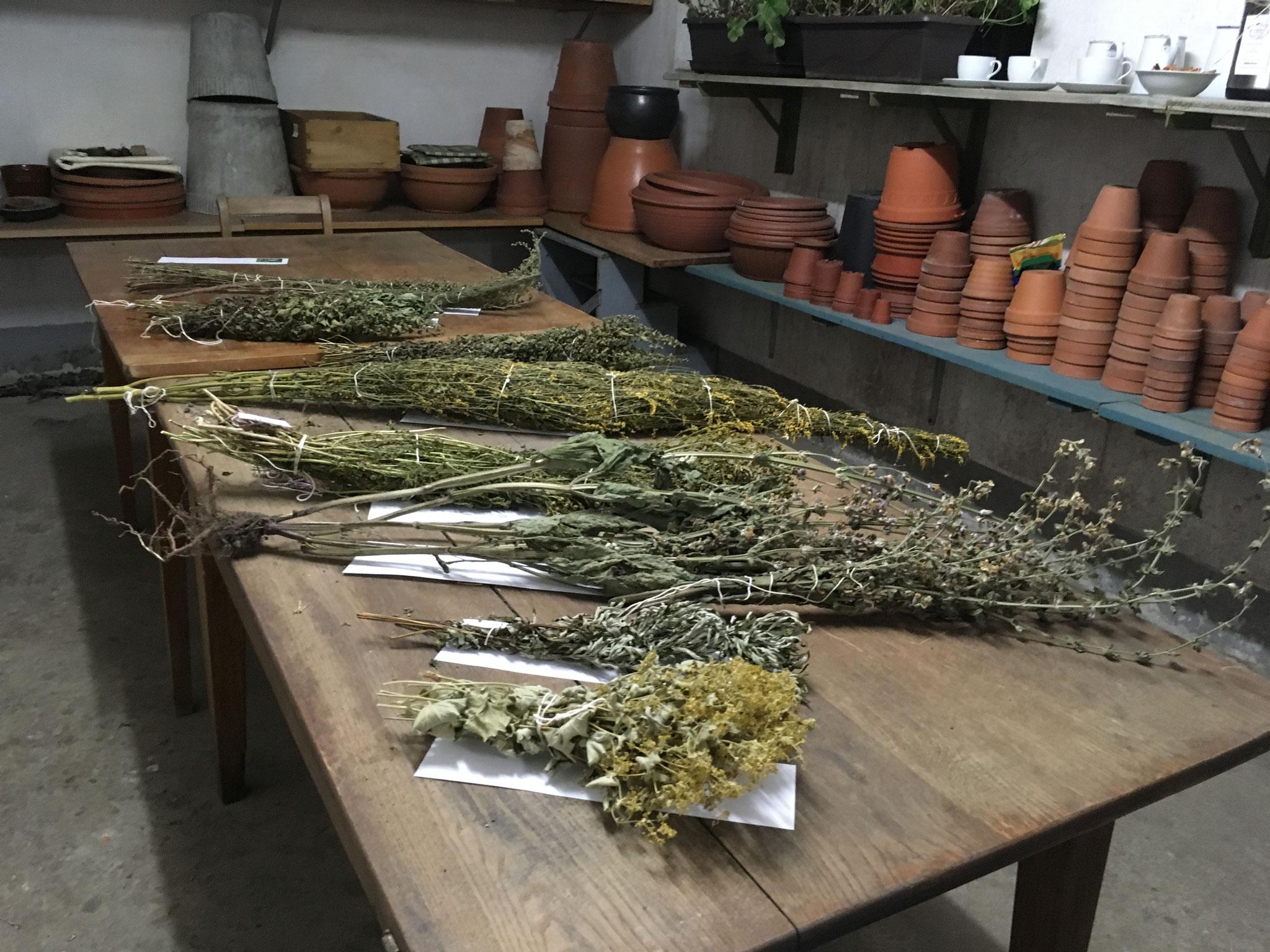 Kräuterbüschel zum Räuchern