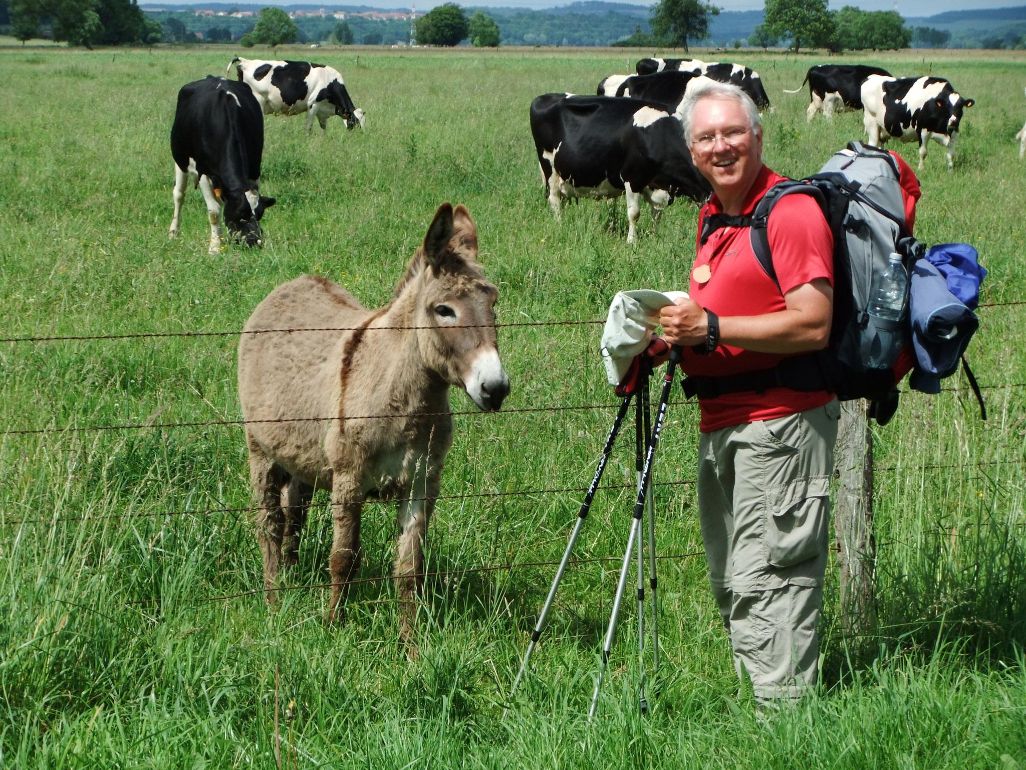 Gerd und der Esel