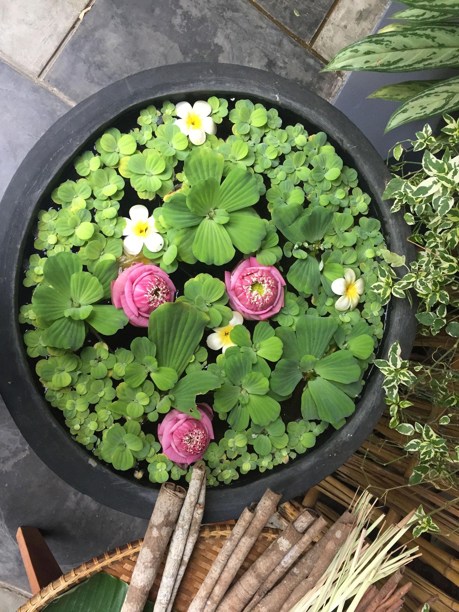 Wenn du eine Blume magst pflückst du sie. Wenn du sie liebst gibst du ihr täglich Wasser. Wer das versteht, versteht das Leben. Buddha
